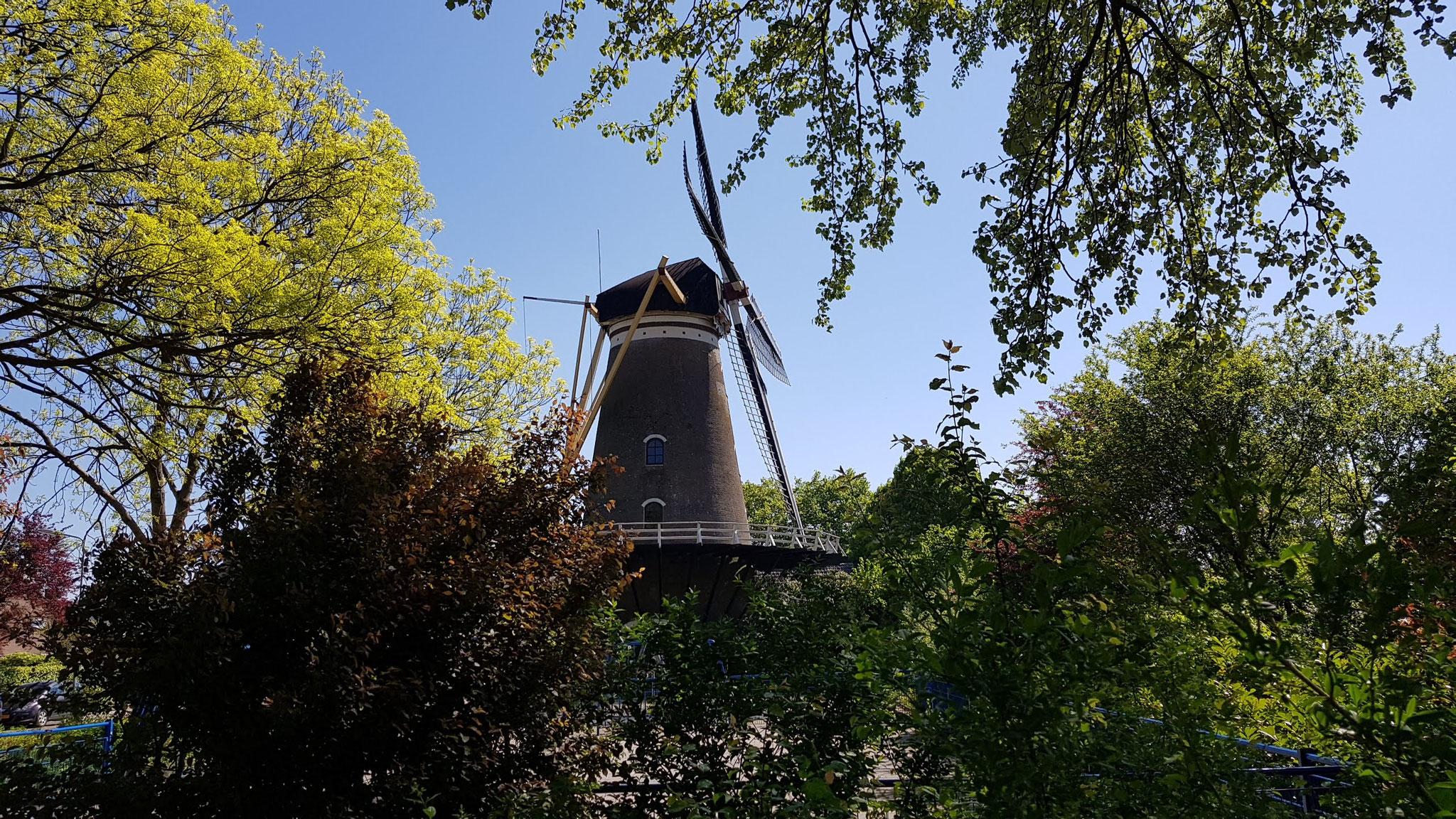 Mühle in Middelburg