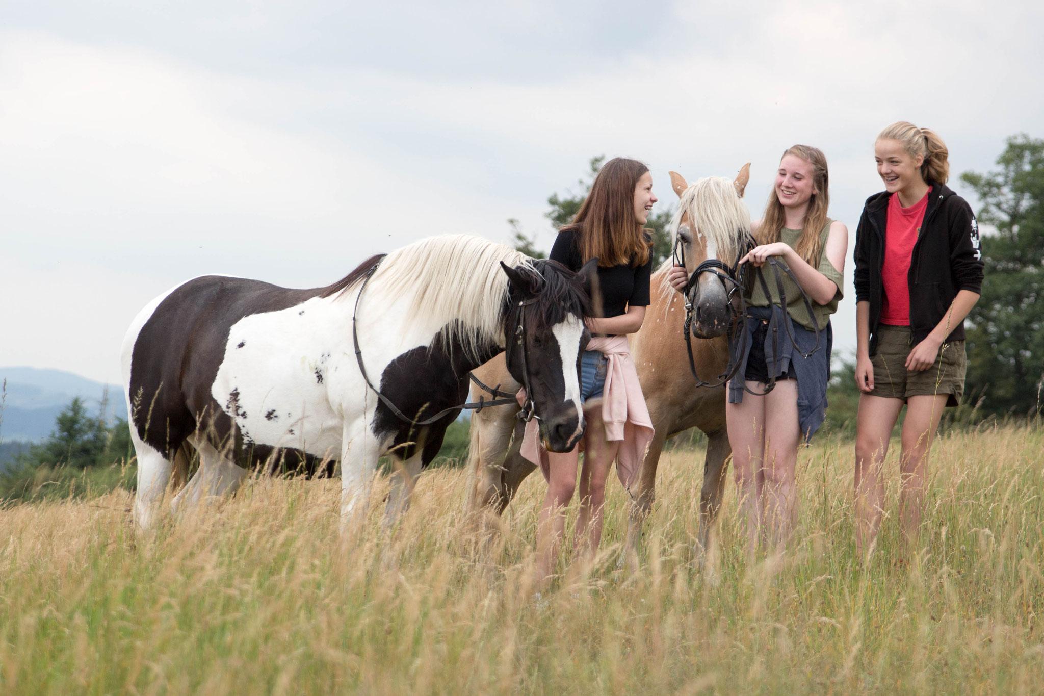 Pferde sind treue Freunde