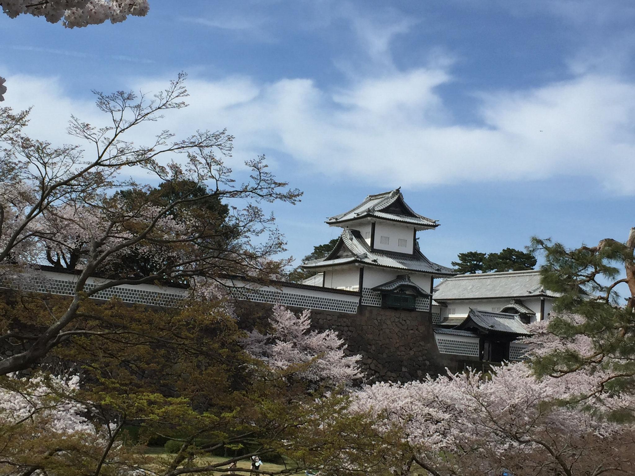 兼六園にて20数年ぶりのお花見!