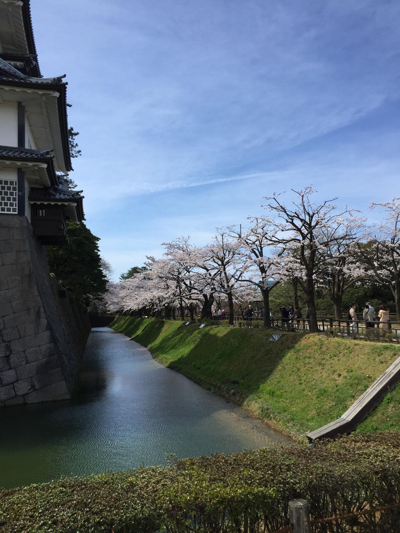 お堀も 桜並木 ♪