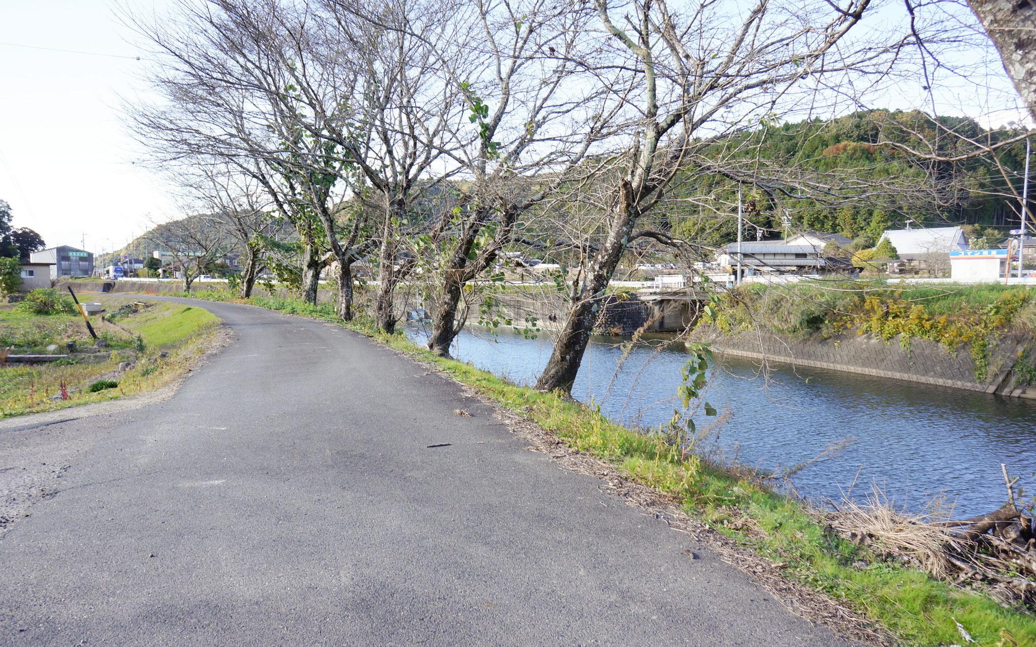 可児川リバーサイドロード