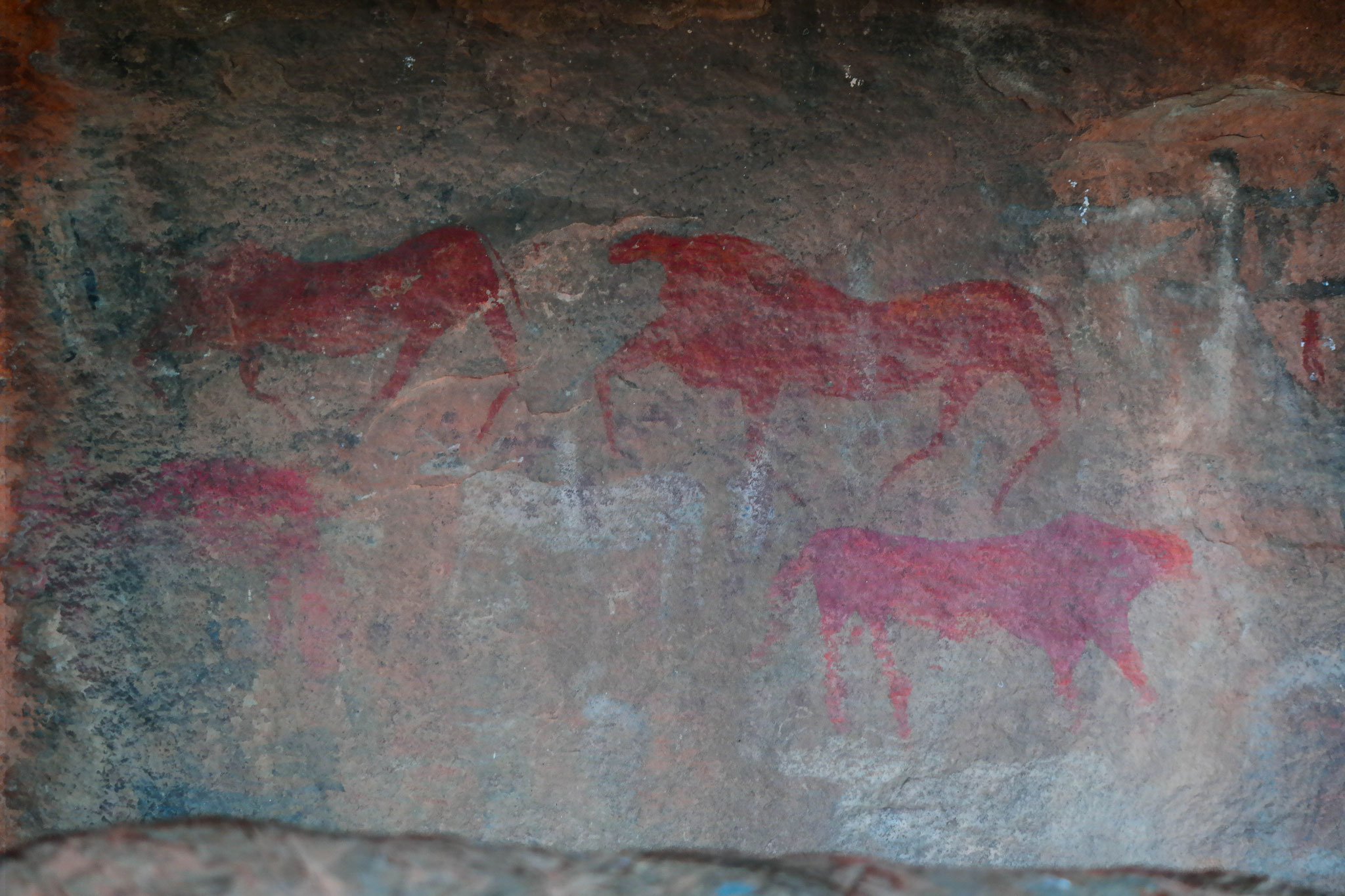 Some of the red paintings that are supposed to be 7.000 years old.