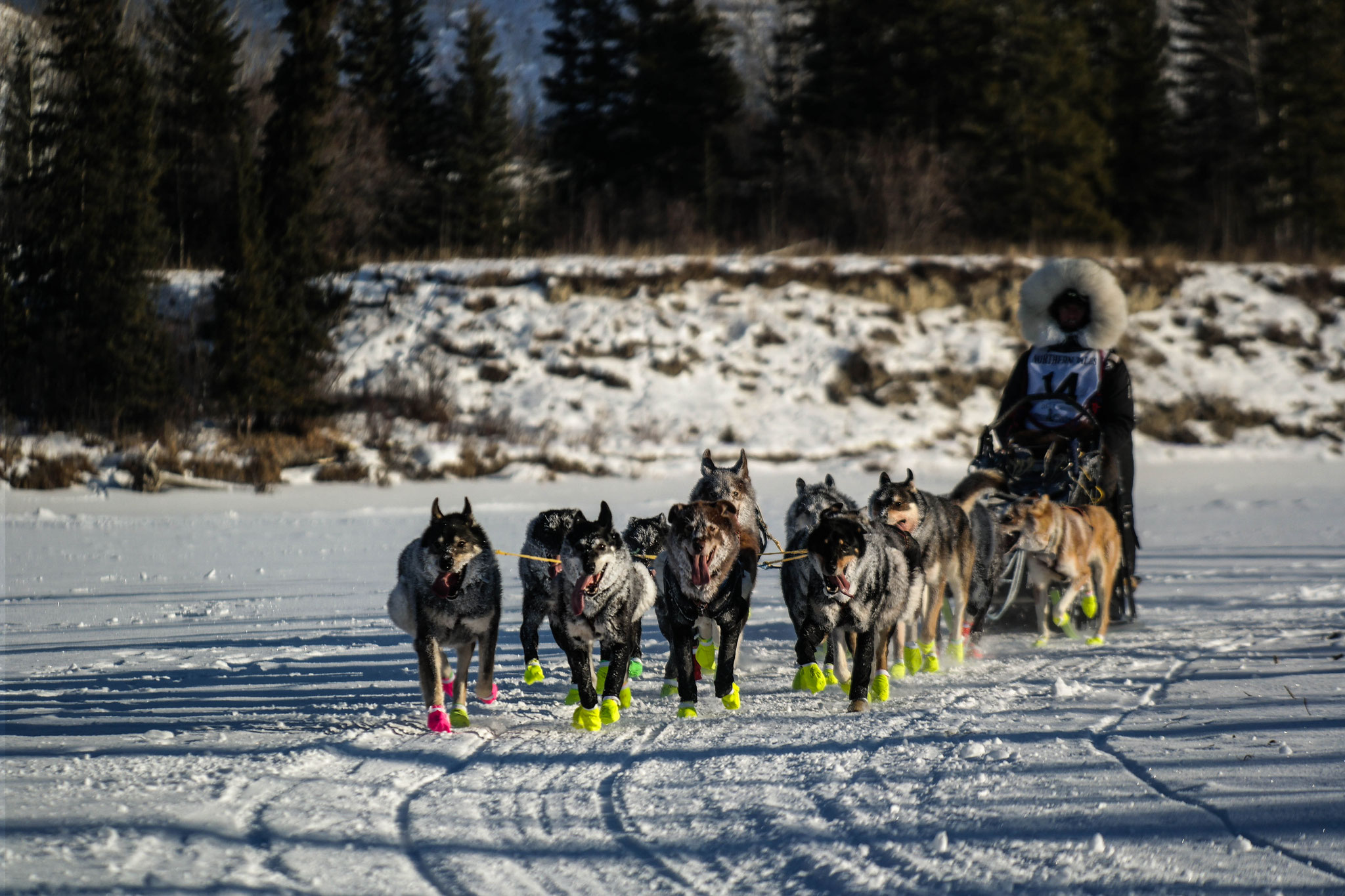 The first dog sled team to pass me!