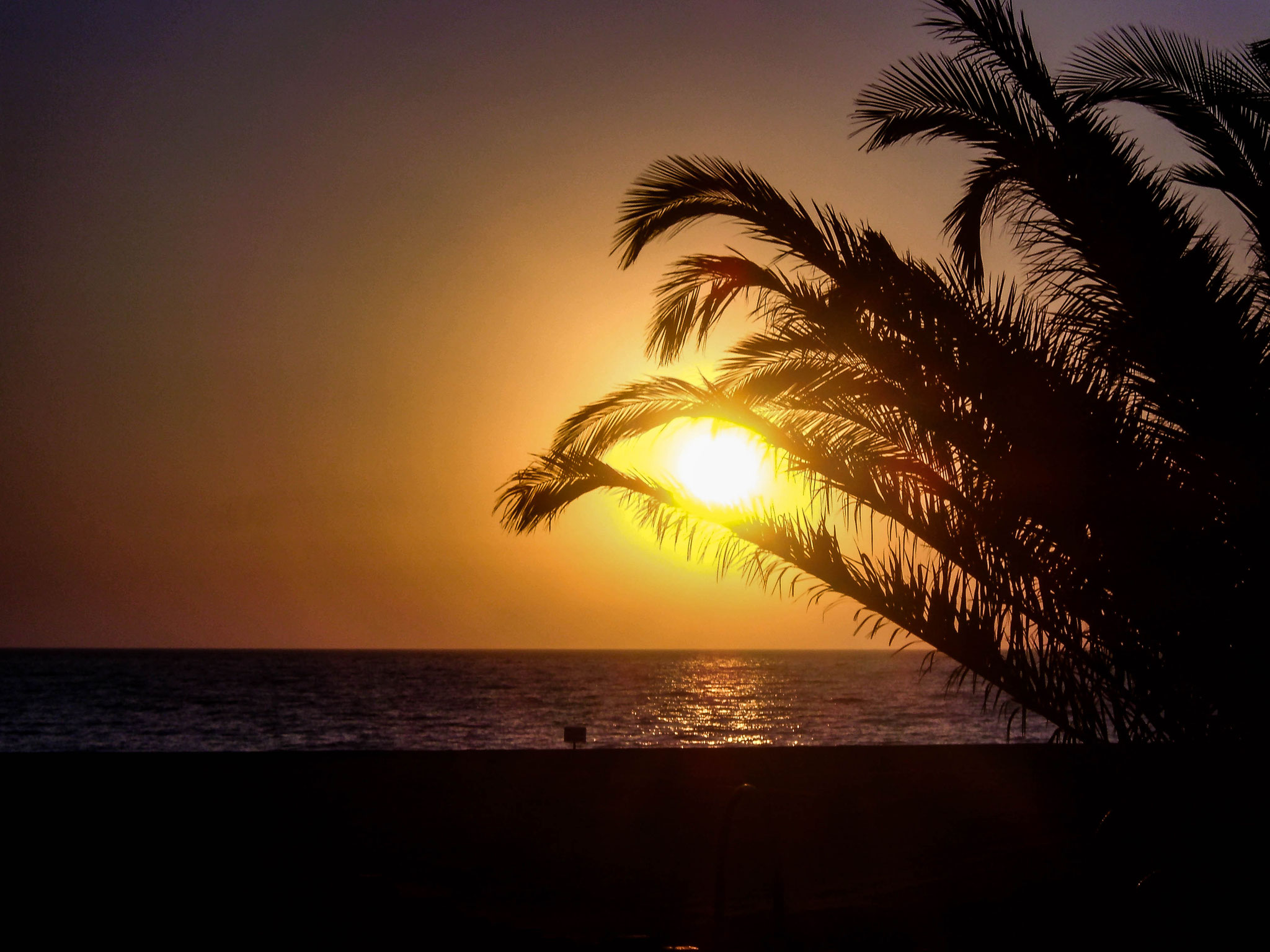 Sunset over the Italian sea with beach and palmtree