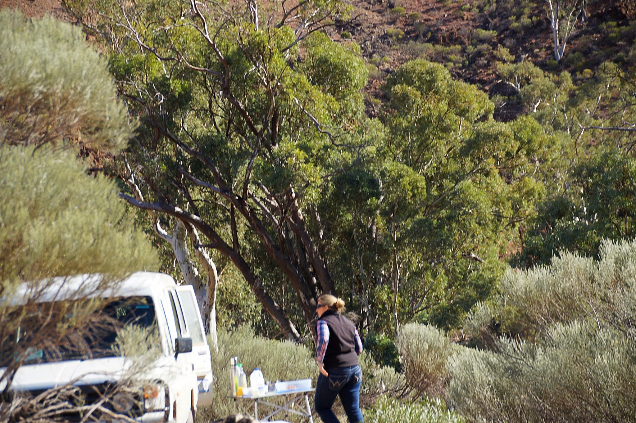 Unsere Geländewagentour mit einer ortskundigen Farmerin in die Brachina und Bunyeroo Gorges hat sich gelohnt.