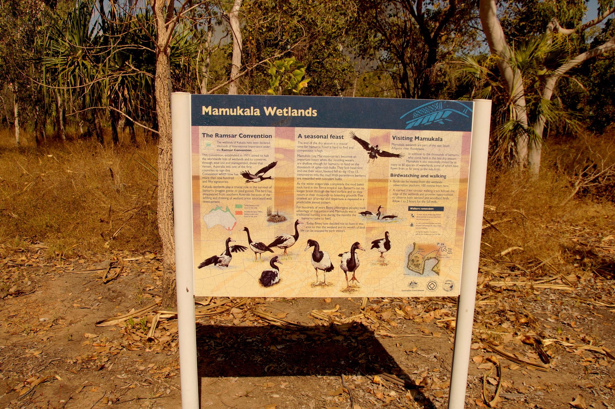 Mamukala Wetlands: Zum Ende der Trockenzeit (Ende August bis Oktober) ein Vogelparadies.