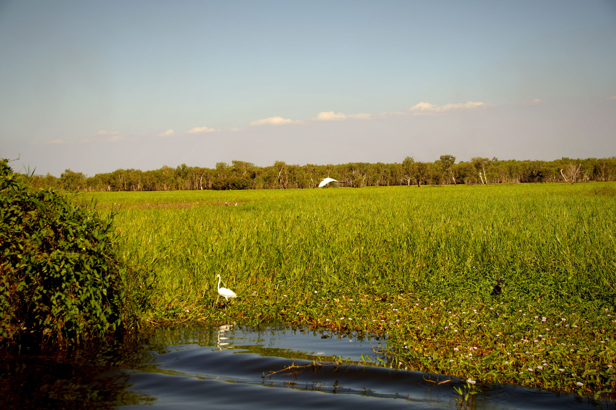 Der Yellow Water Billabong strotzt vor saftigem Grün.