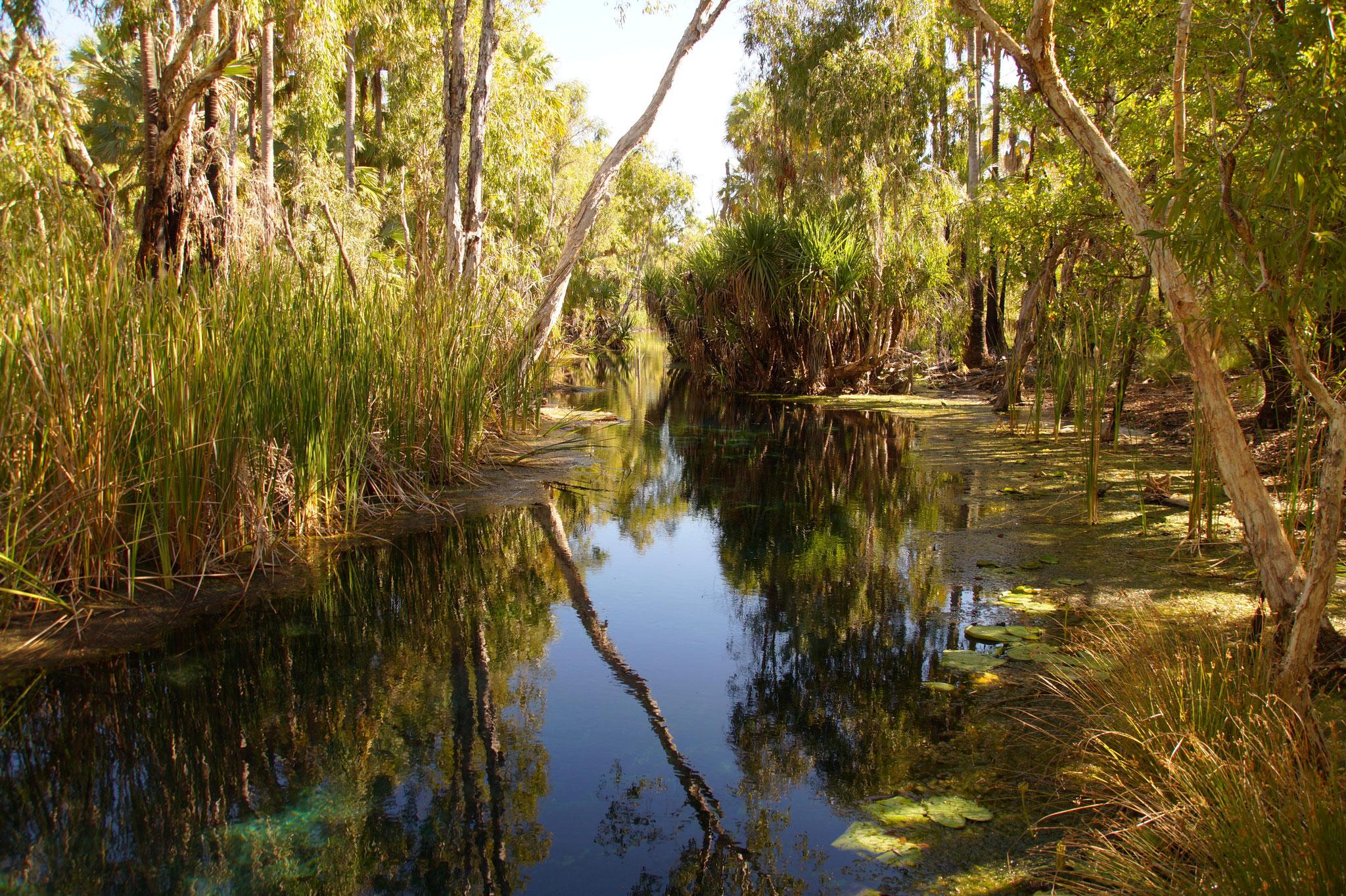 Am Roper River grünt es dort üppig.