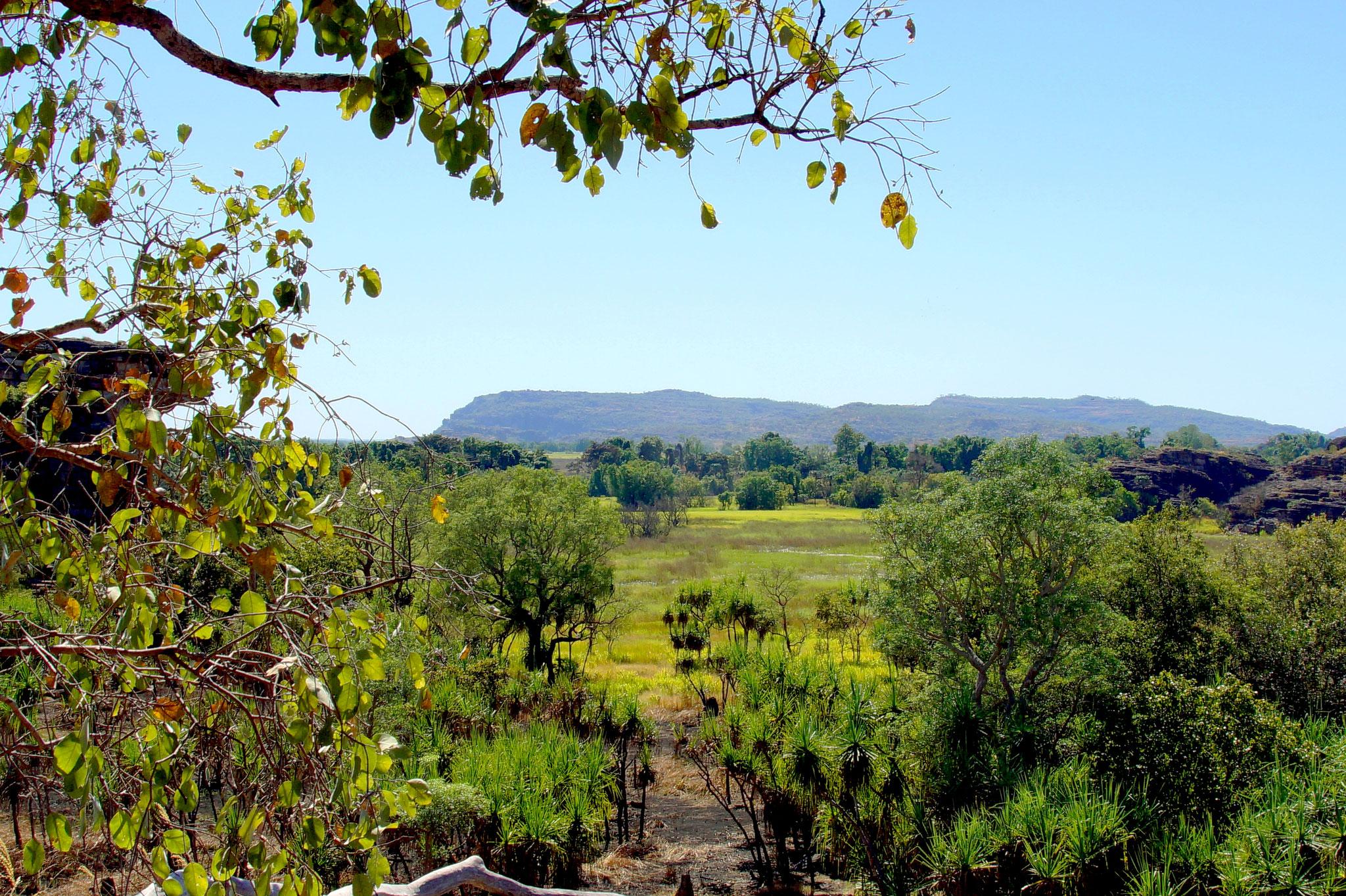 Vielseitiges Australien: im Zentrum rote Erde und karge Wüstengewächse, in den Tropen saftiges Grün.