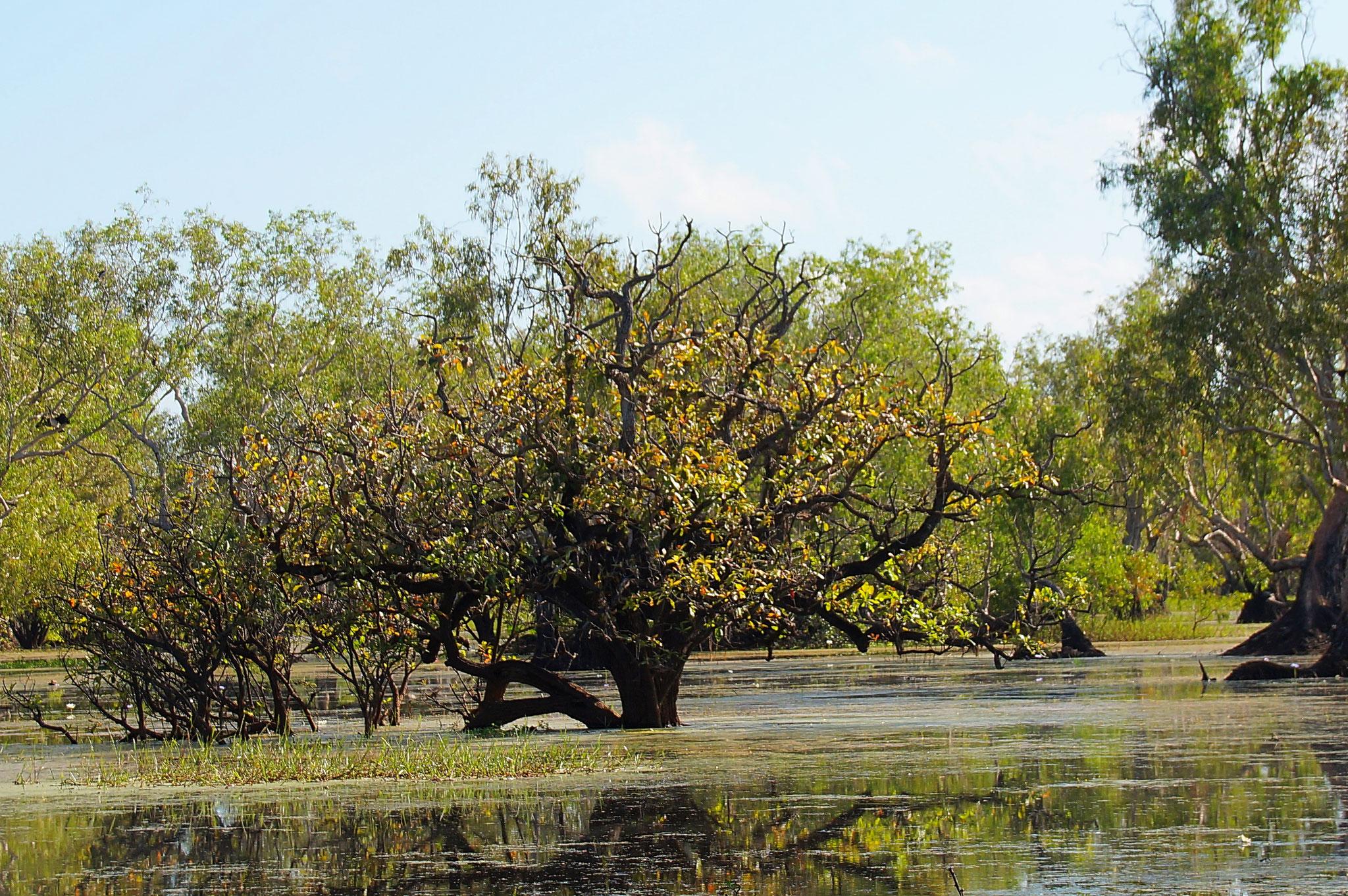Die Mary River Wetlands sind Teil der 10.000 Quadratkilometer großen Floodplains des Northern Territories.