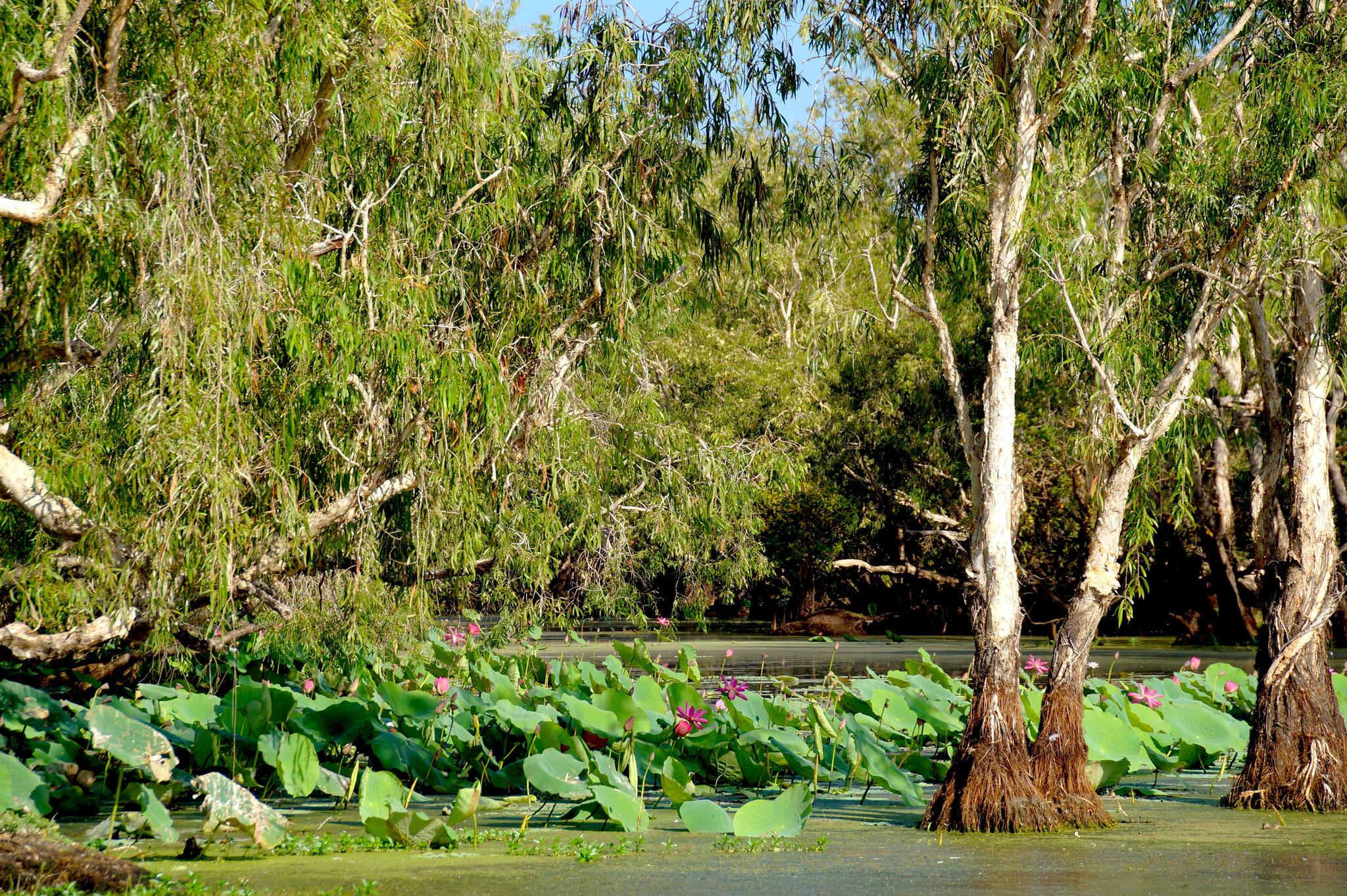 Einblick in die bezaubernde Wasserlandschaft der Mary River Wetlands.