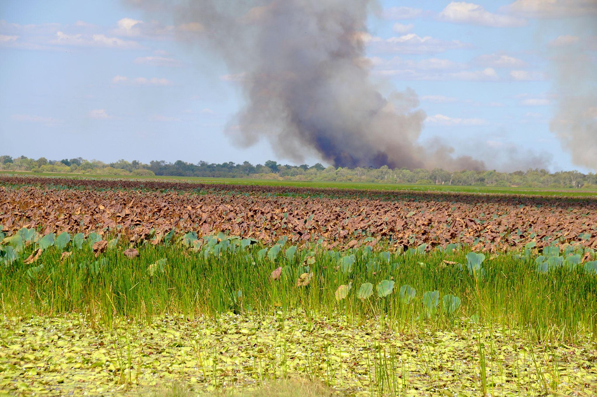 Im Mai sahen wir von der Vogelwarte der Mamukala Wetlands aus nur den Rauch eines Buschfeuers.