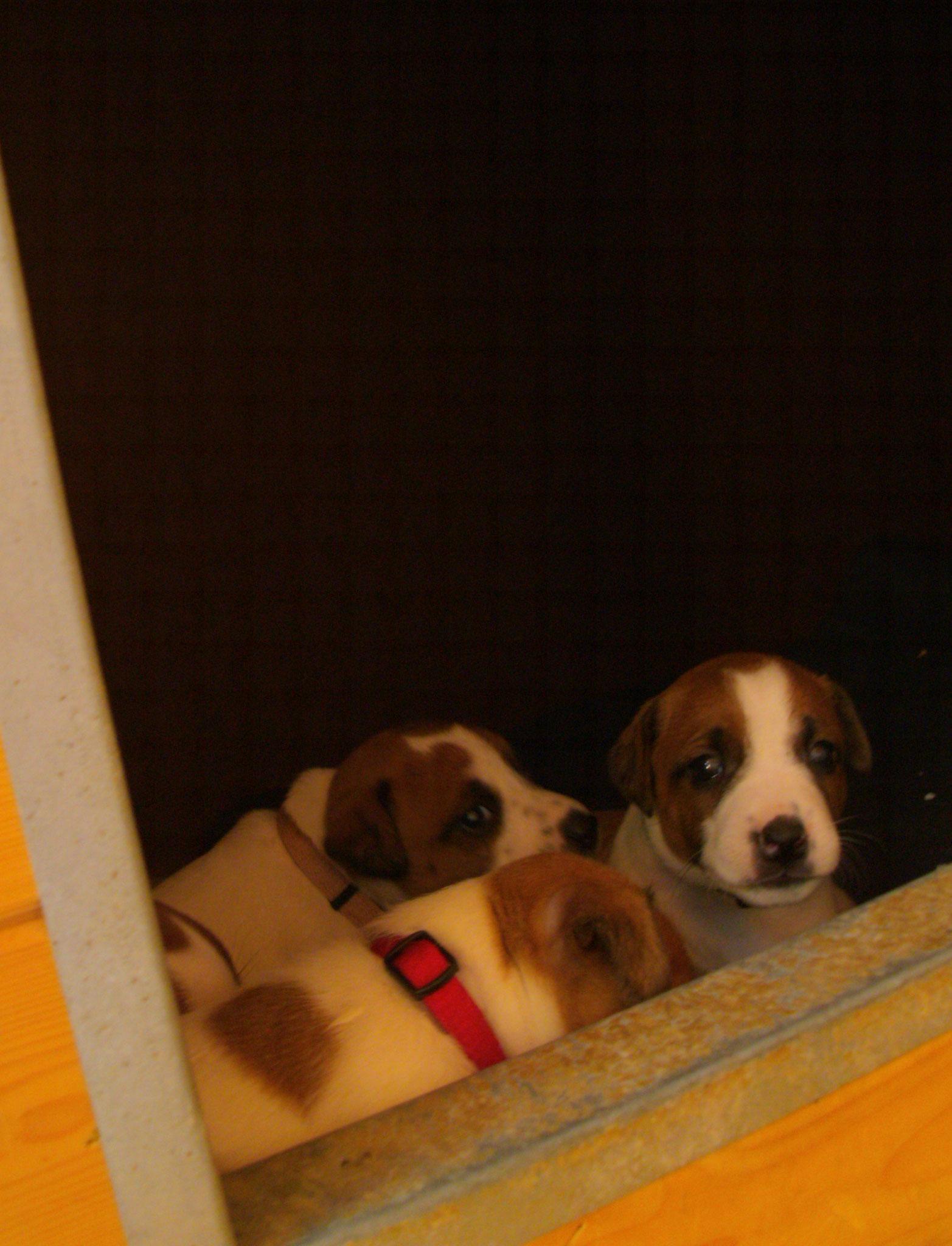 in der Hundehütte im Welpenhaus!