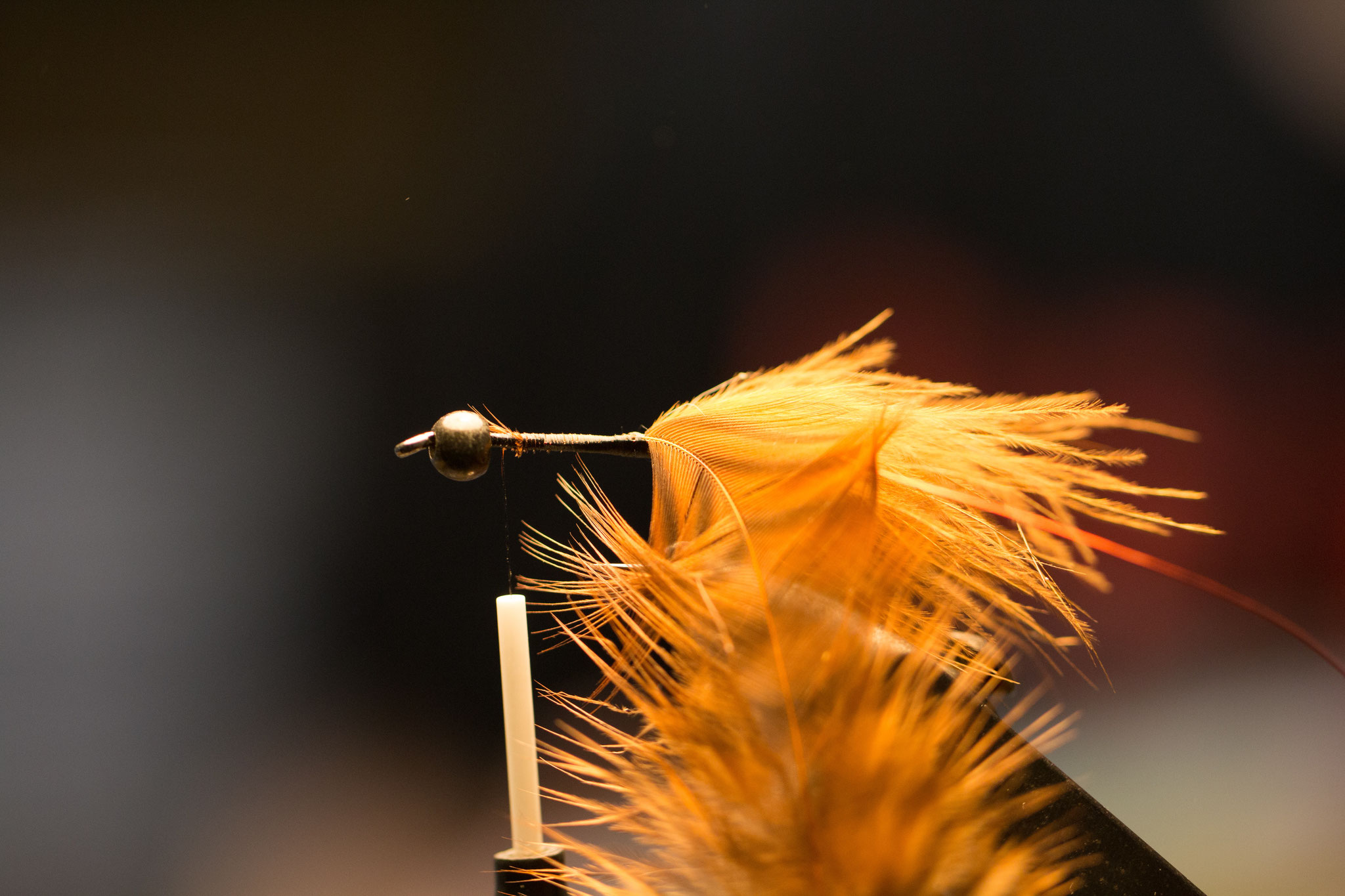 First, tie in a piece of wire that will secure the hackle afterwards. Then, tie in a saddle hackle with its tip.
