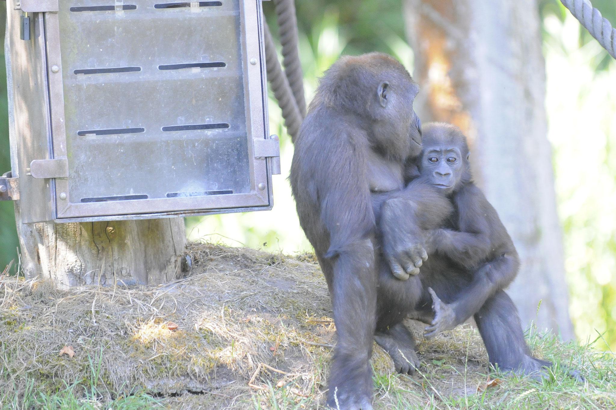 Kumili mit ihrem Jungen Kio