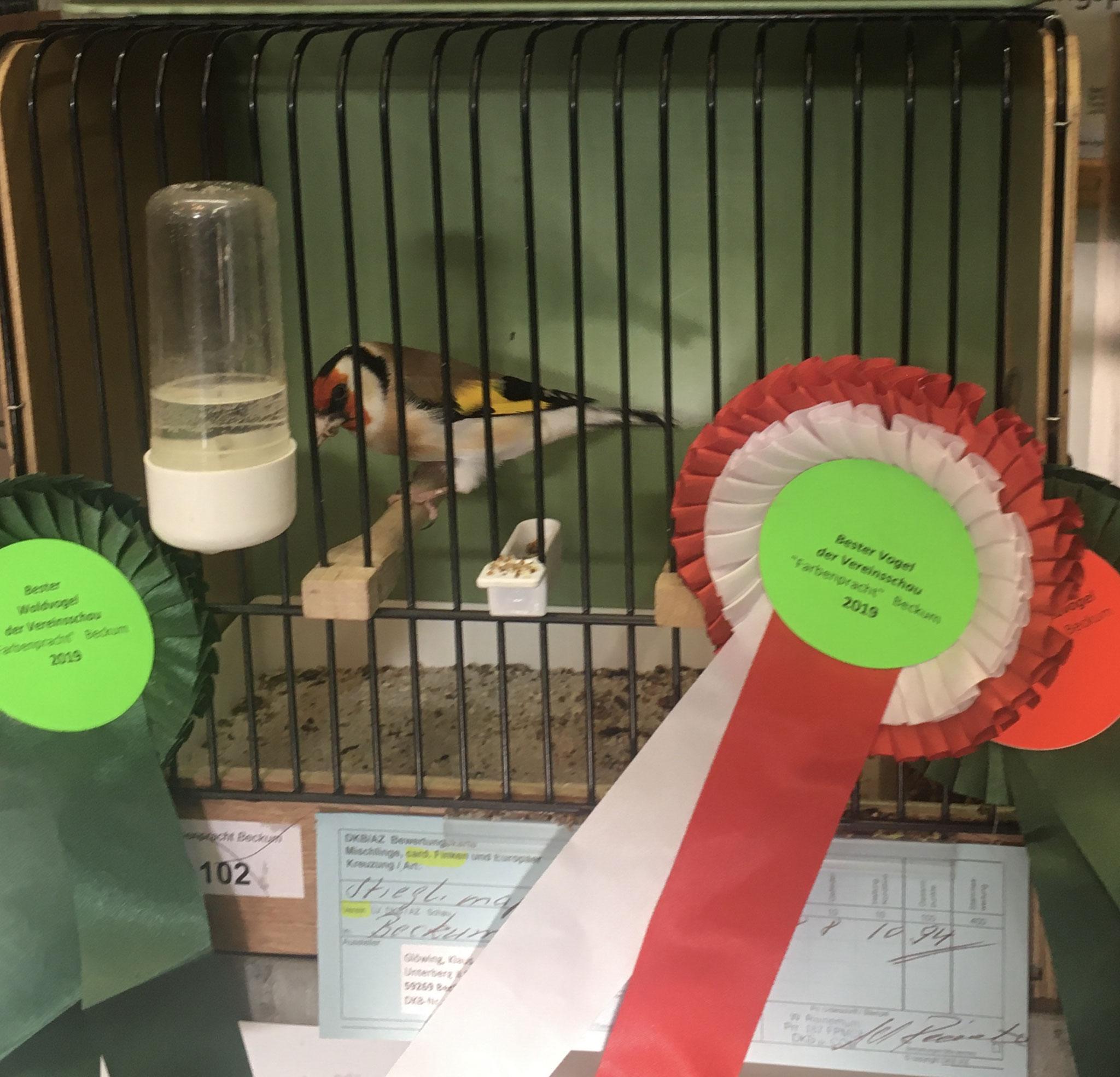 Bester Vogel der Schau - Vereinsschau 2019