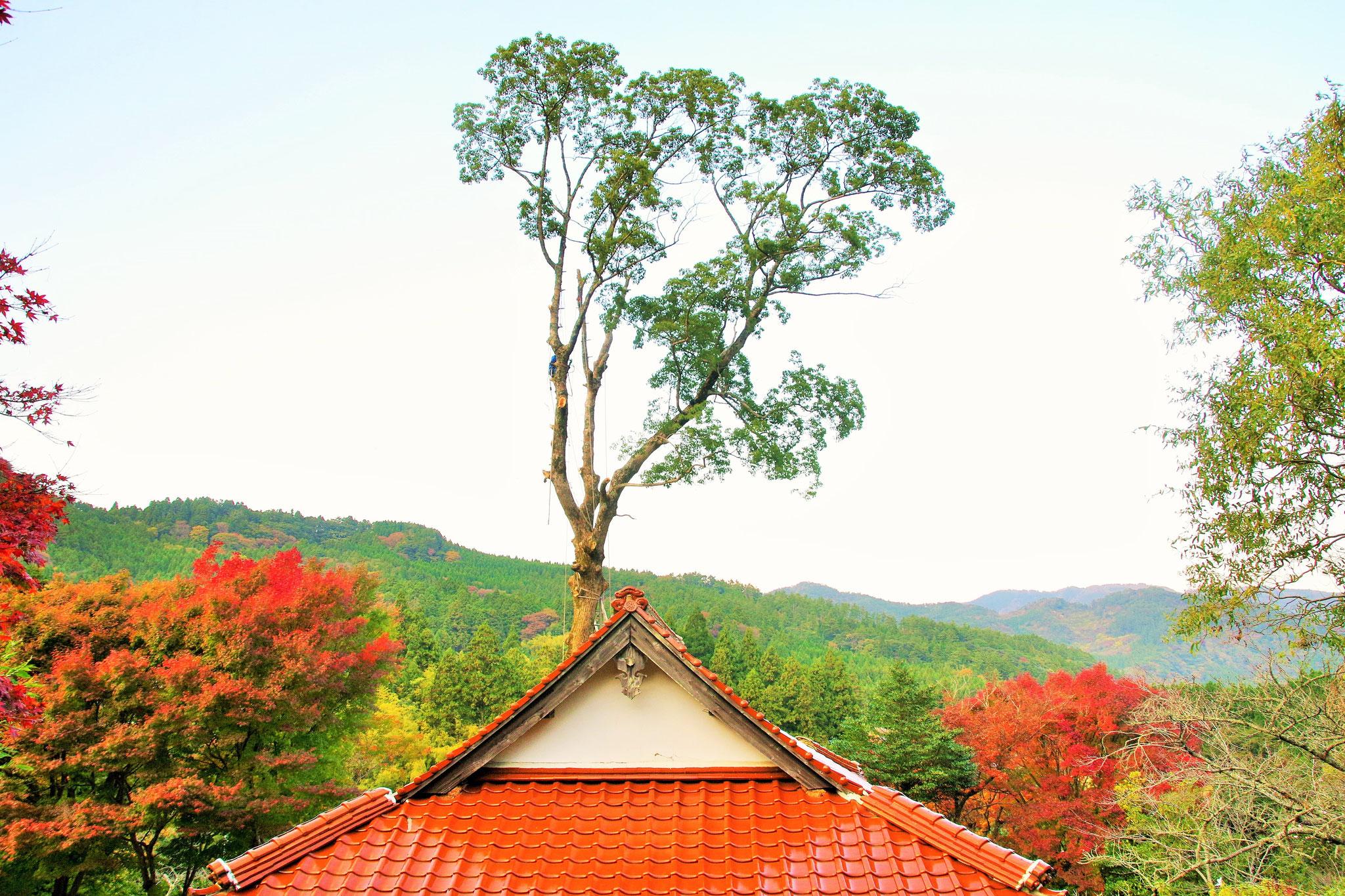 あごなし地蔵堂の秋