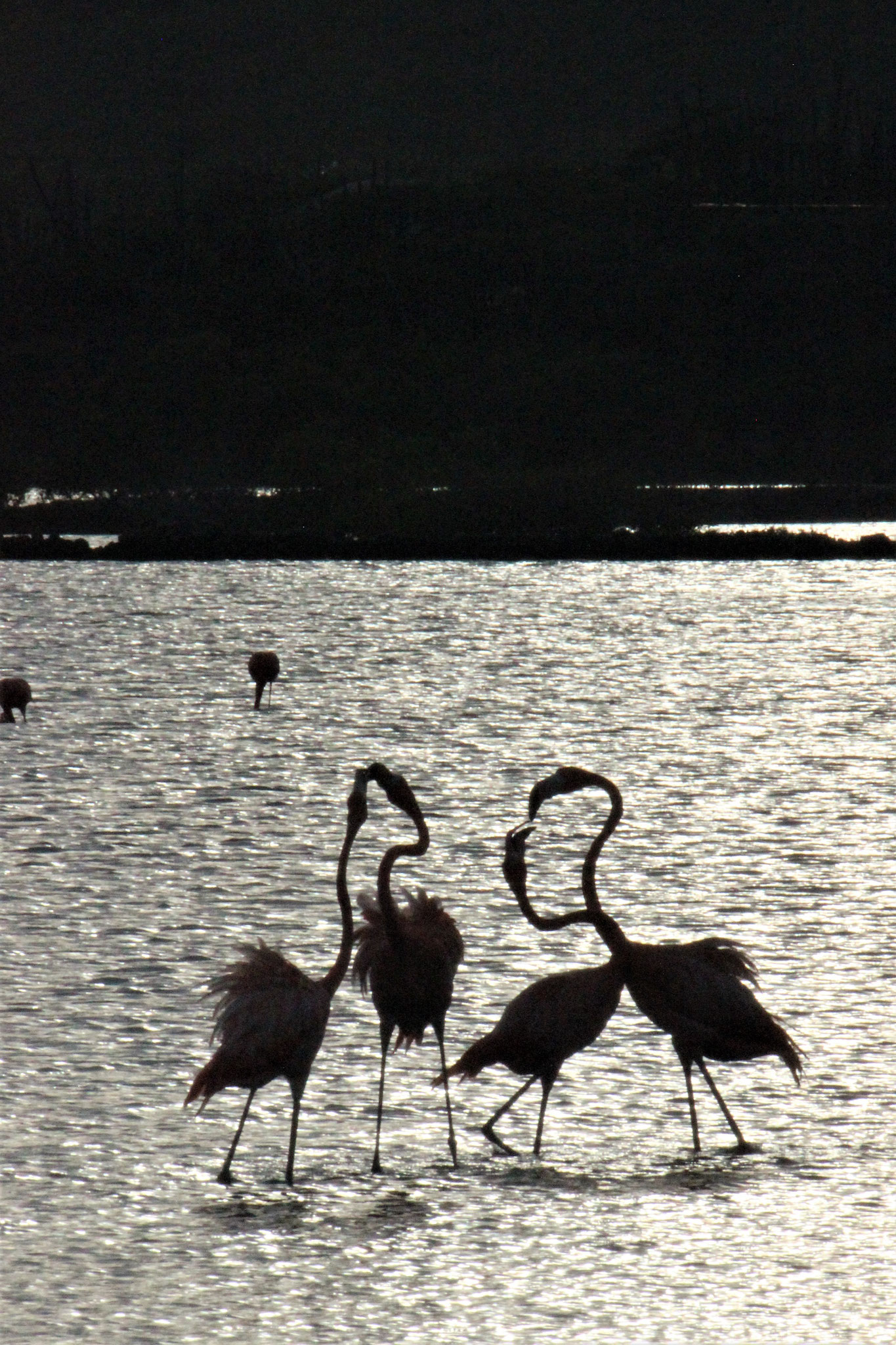 Flamingos-urlaub-curacao-ferienhaus-pool-karibik