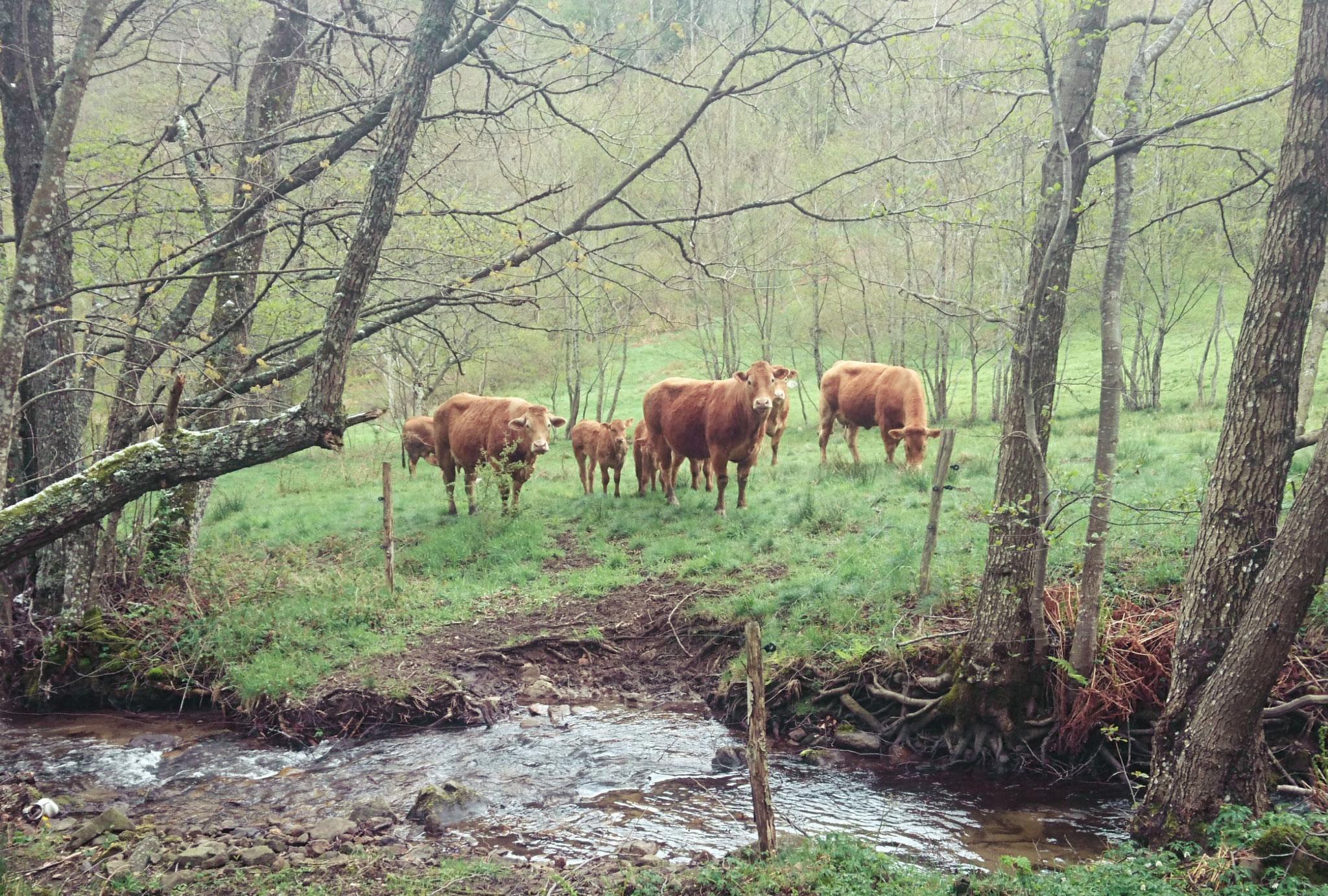 Le troupeau à Graix