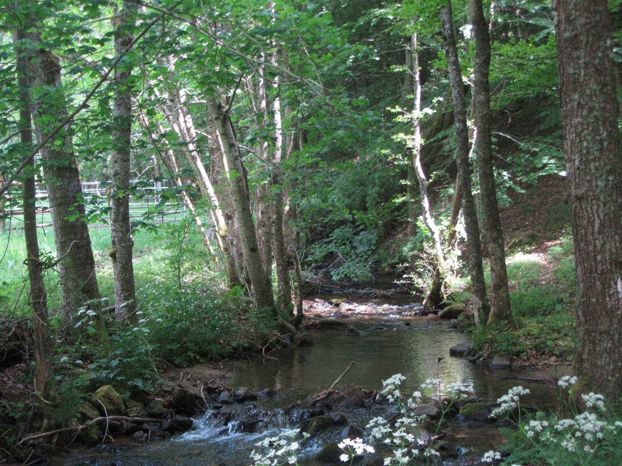 La rivière qui traverse les prés