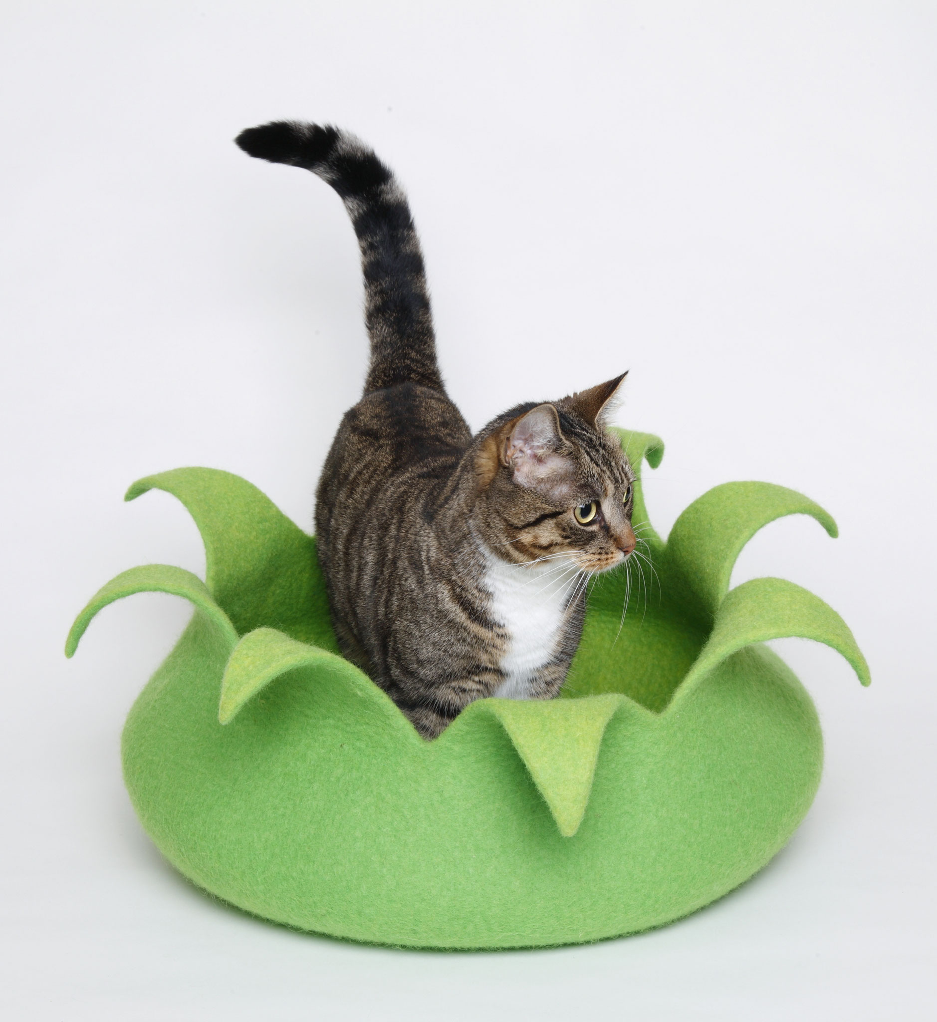 Katzenkorb, Basic oder Premium
