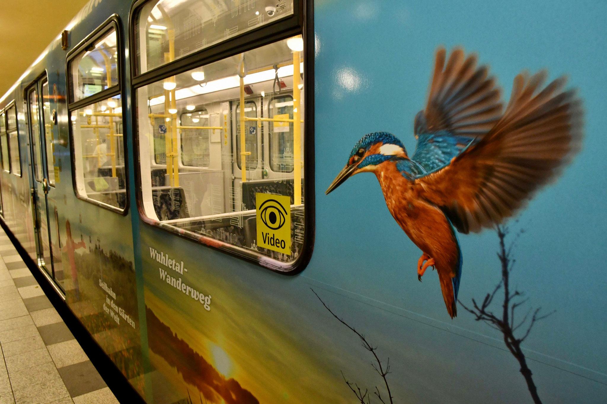 Die U-Bahn macht Werbung für den Wuhletal-Wanderweg, die Gärten der Welt, den Skywalk, den Dorfanger Marzahn und viele andere Highlights im Bezirk. © pressefoto-uhlemann.de