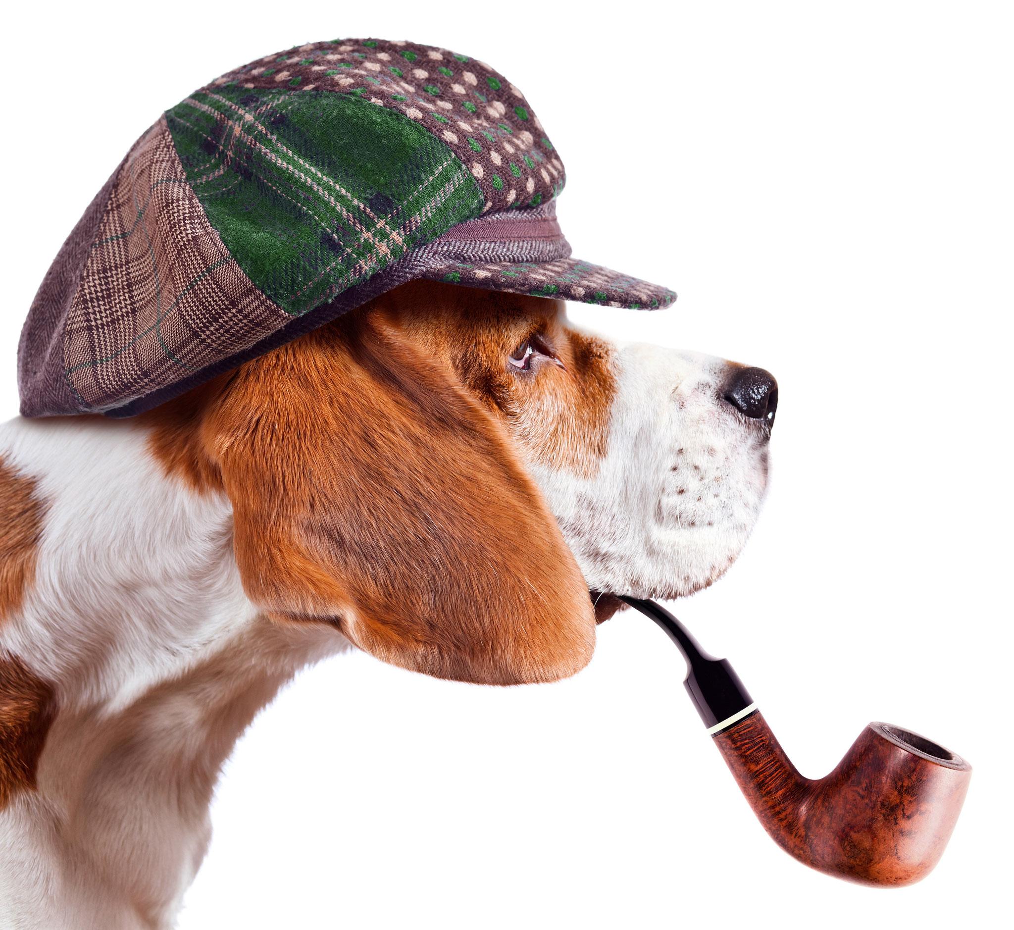 Sa, 21.08. | 10.00-13.00 Uhr: Krimitour mit Hund durch Kaulsdorf | © Igor Normann, Adobe Stock