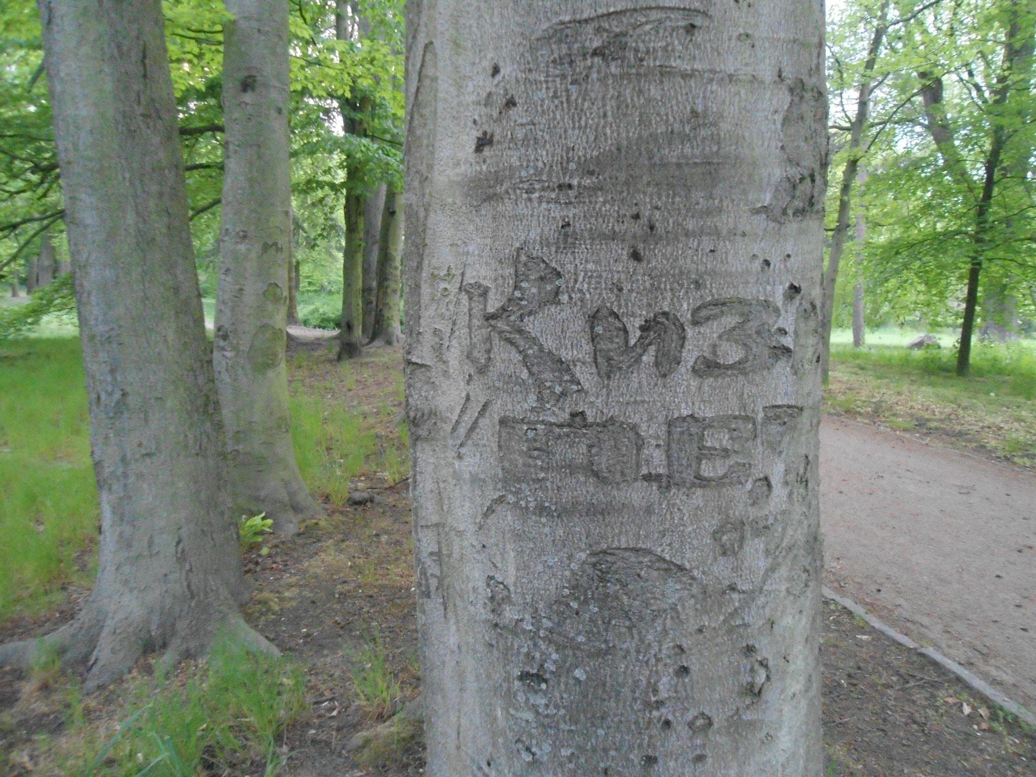 """Außerdem zeugen heute noch in alte Linden geschnitzte kyrillische Buchstaben vom ehemaligen """"Notfriedhof"""" der Sowjetischen Militäradministration. © Heinrich Niemann"""