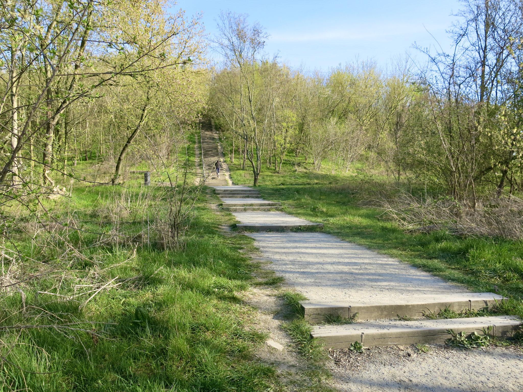 Tipp 9: Kienberg: Ein Weg zum Gipfel führt steil bergauf.
