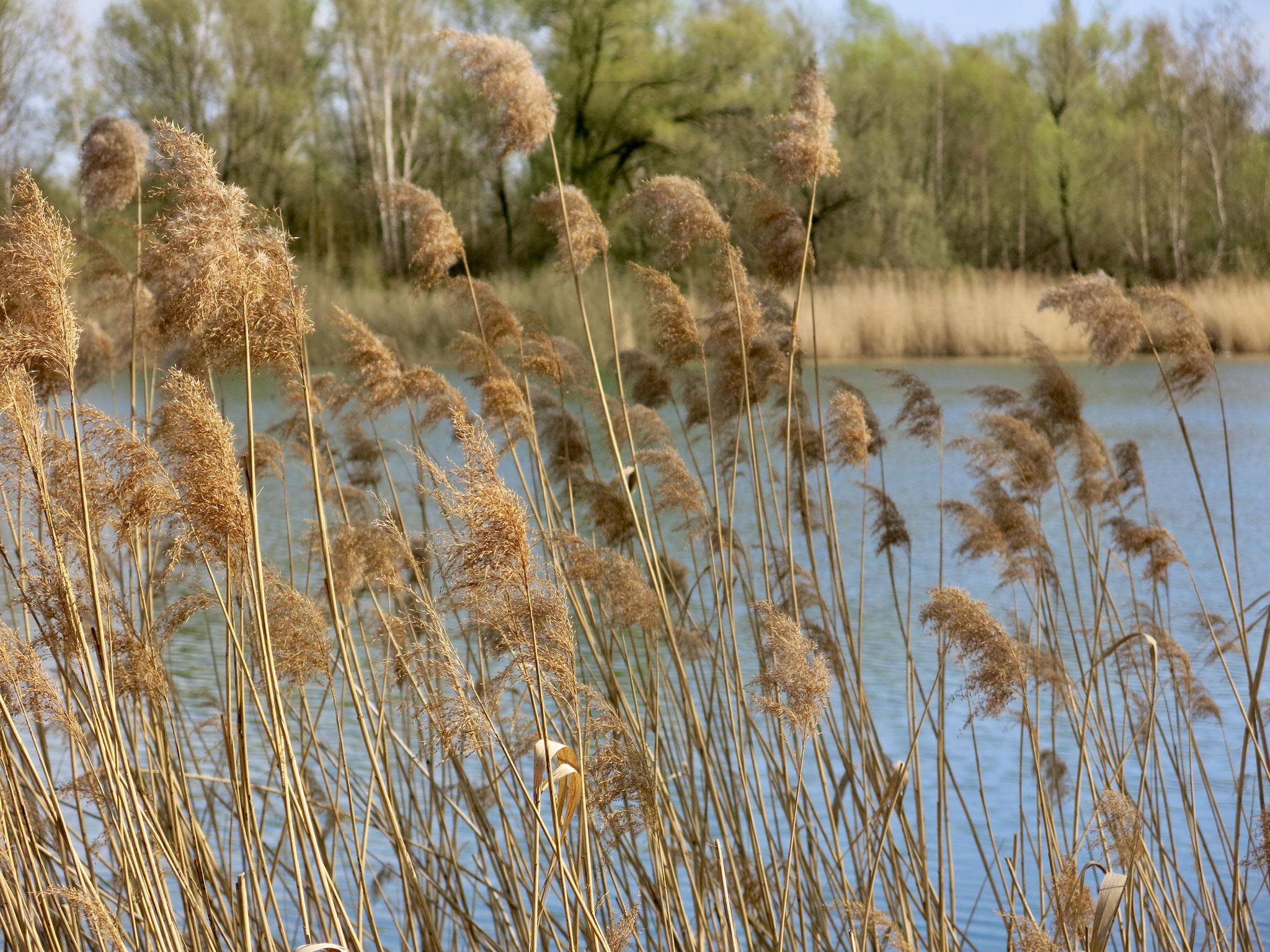 Tipp 5: Kaulsdorfer Seen, Butzer See