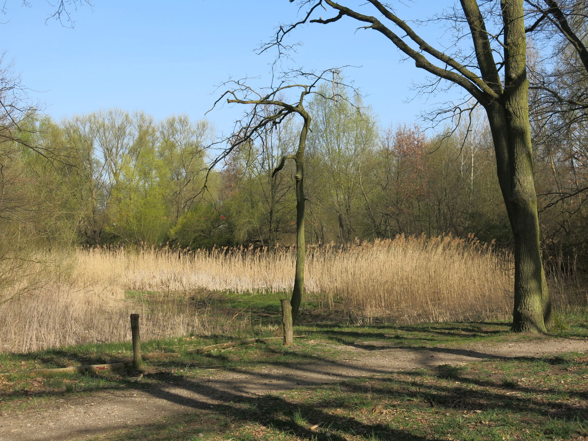 Tipp 3: Wuhle-Hönow-Weg, Beerenpfuhl