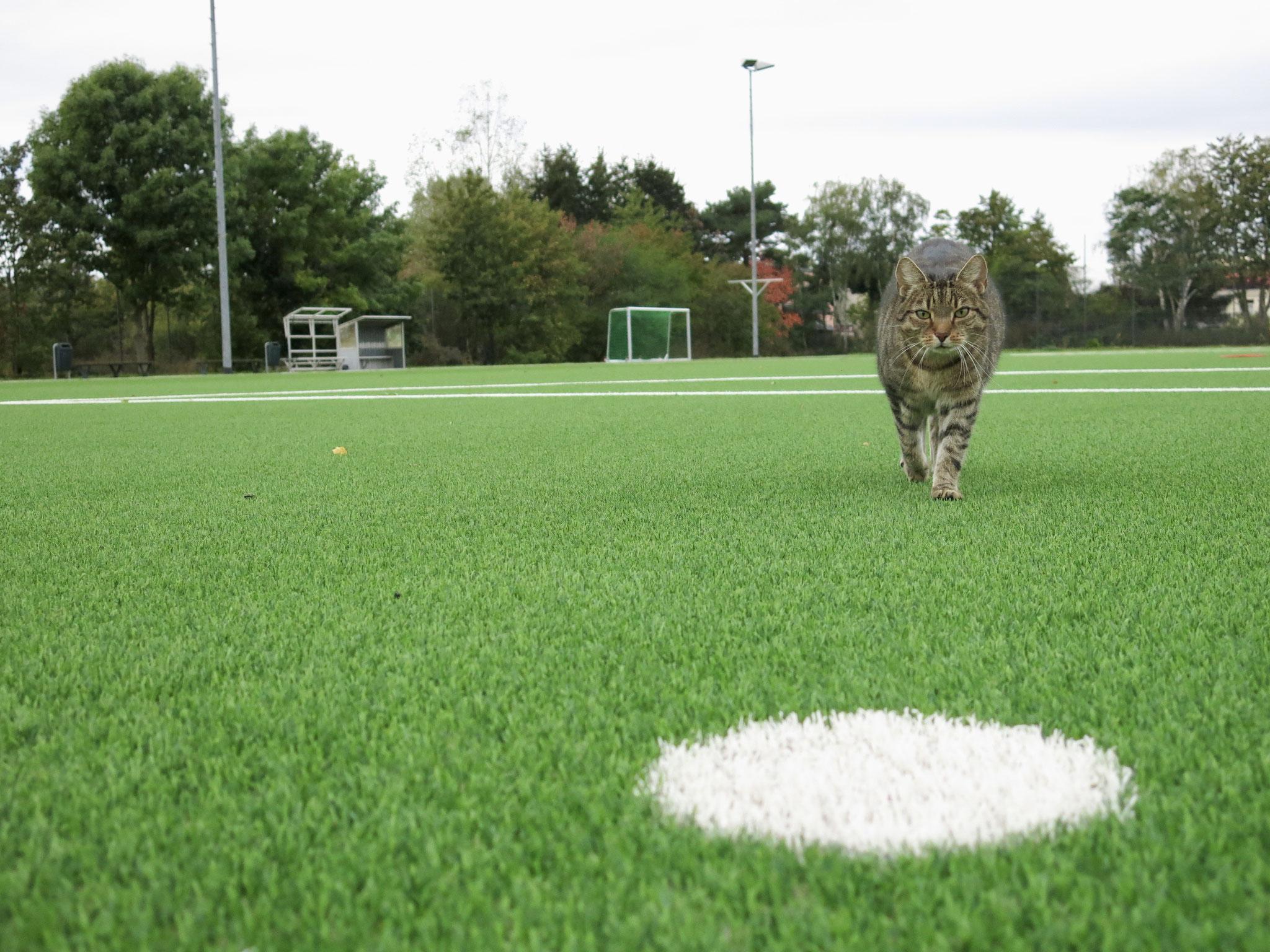 Auch Sportplatz-Kater Sternchen ließ es sich nicht nehmen, eine erste Runde auf dem grünen Teppich zu drehen.