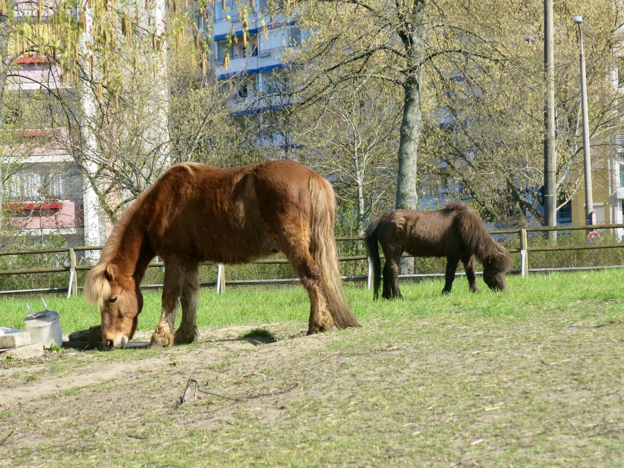 Tipp 10: Alt-Marzahn, Pferde