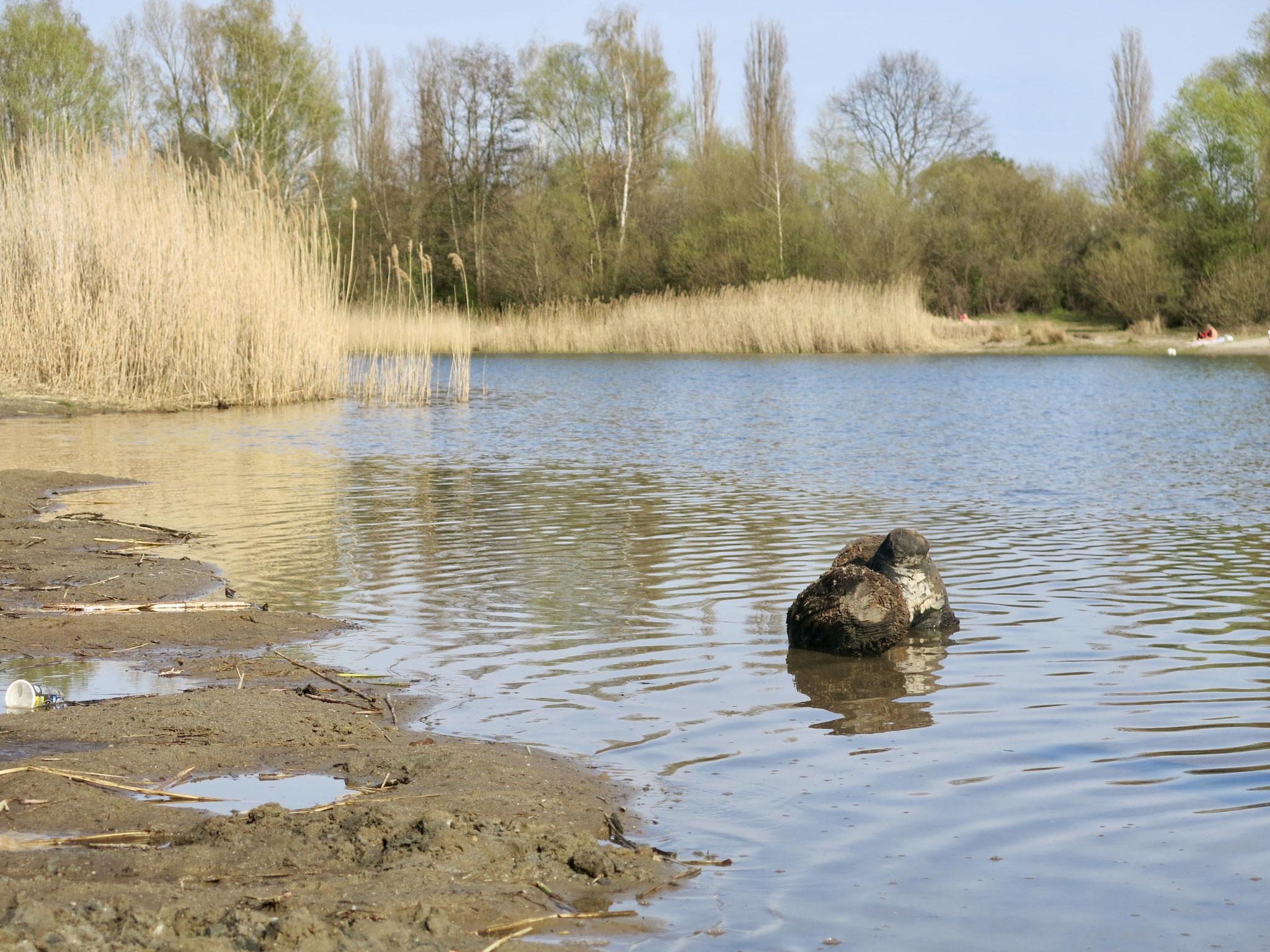 Tipp 5: Kaulsdorfer Seen, Habermannsee