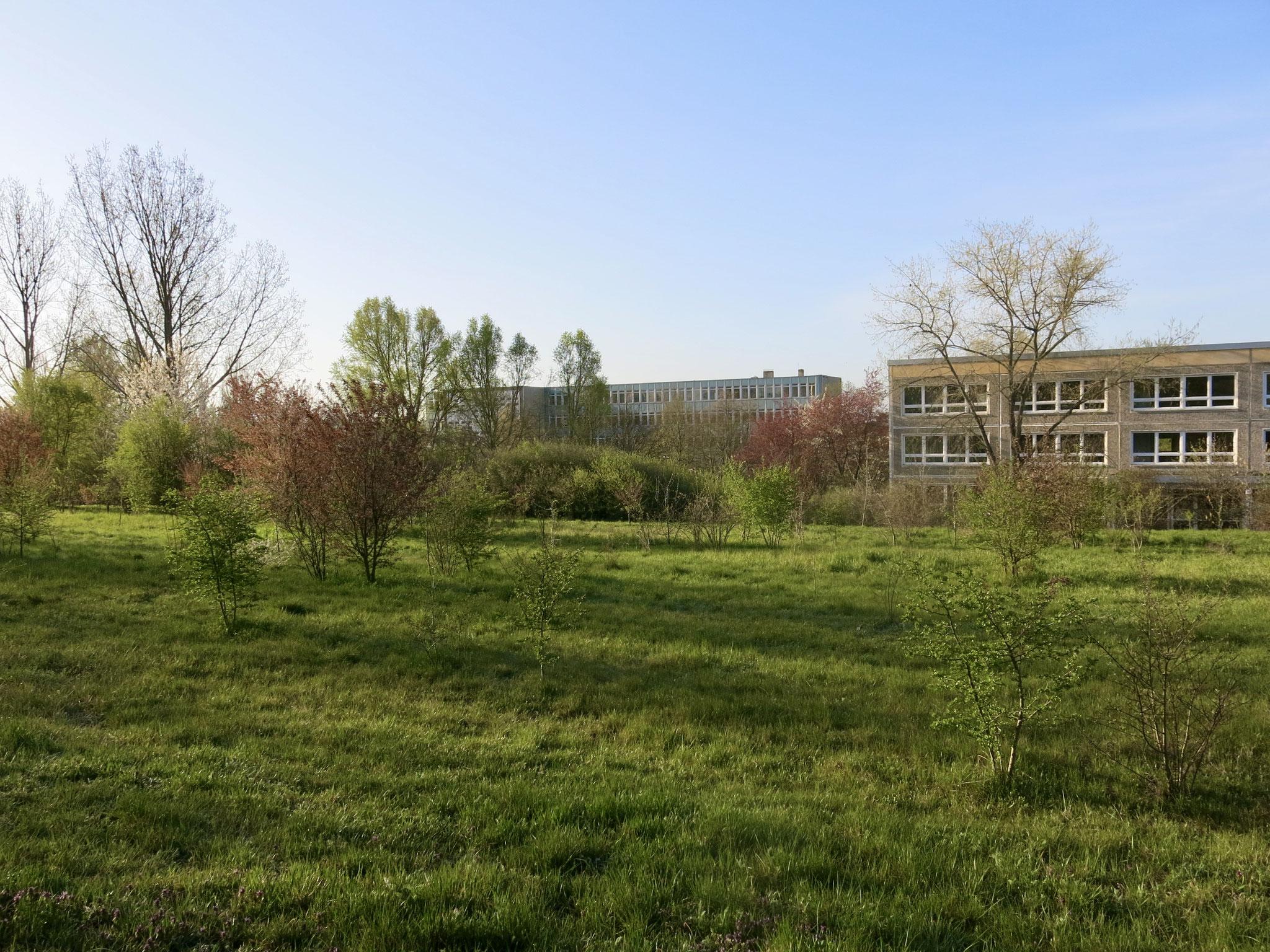 """Tipp 7: Vom """"Berliner Balkon"""" zum Gutspark: In Richtung Osten führt der Weg hinter der ehemaligen Oberschule am Elsengrund entlang"""