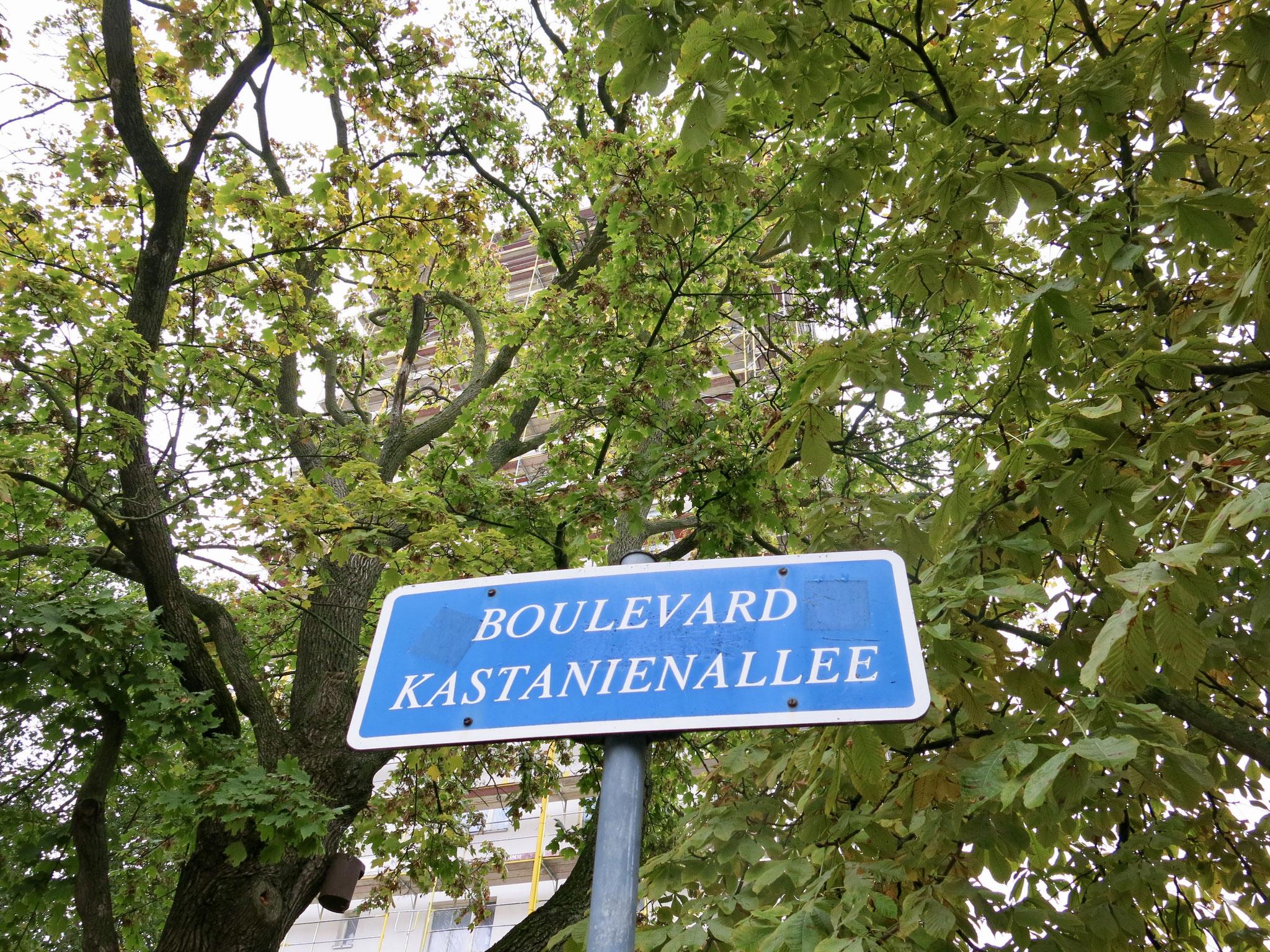 Do, 22.10., ab 13 Uhr: Spazierblick zum Boulevard Kastanienallee