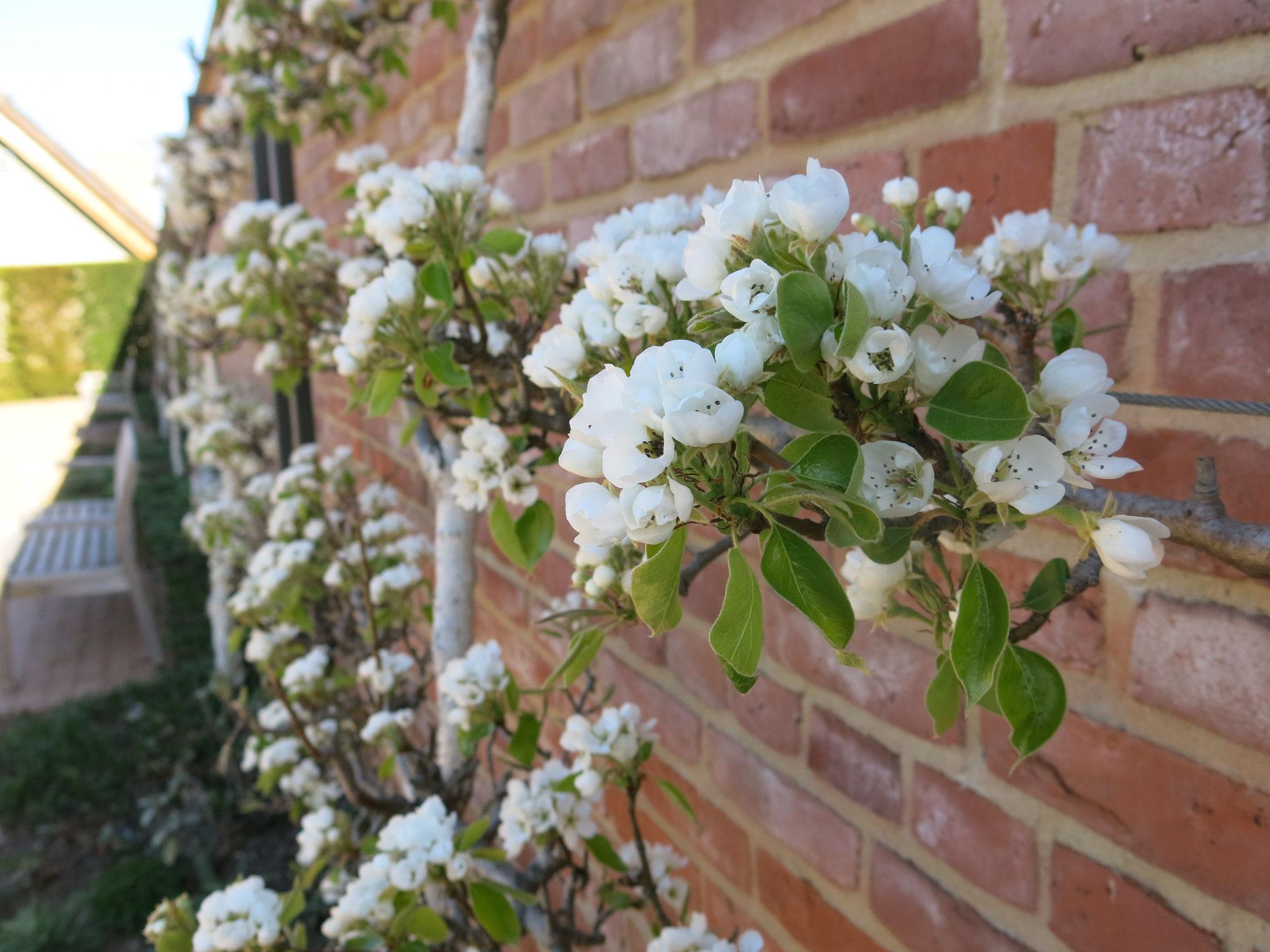 Tipp 11: Gärten der Welt: Englischer Garten