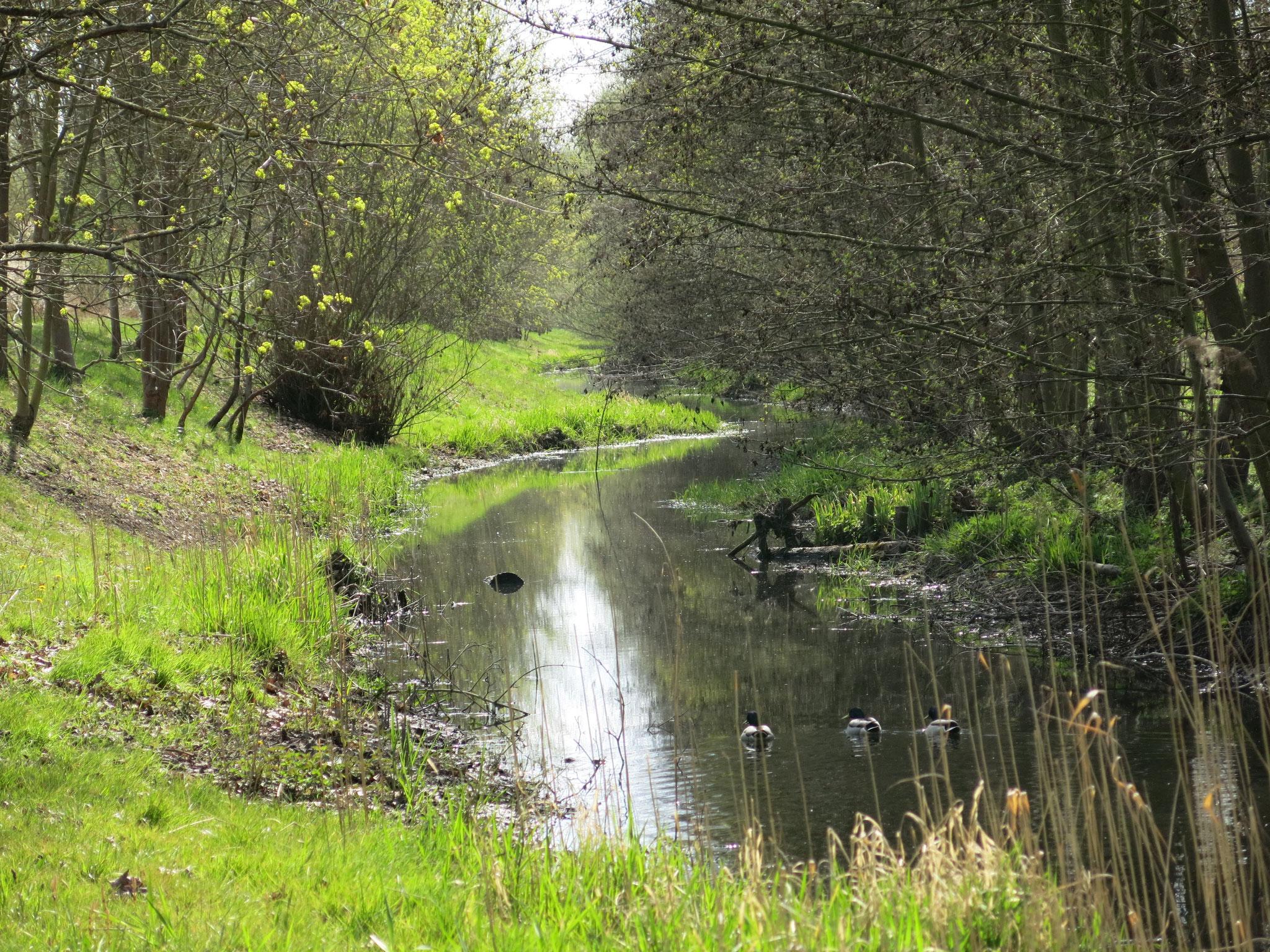 Tipp 1: Nördlicher Wuhletal-Wanderweg
