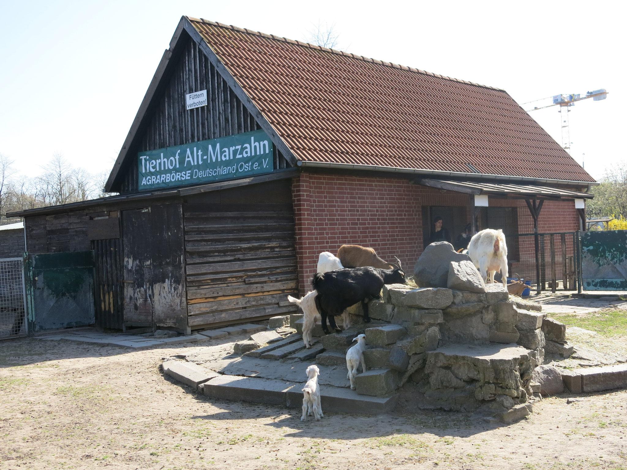 Sa+So, 12.+13.06., 11.00-15.00 Uhr: Besuch auf dem Tierhof in Alt-Marzahn