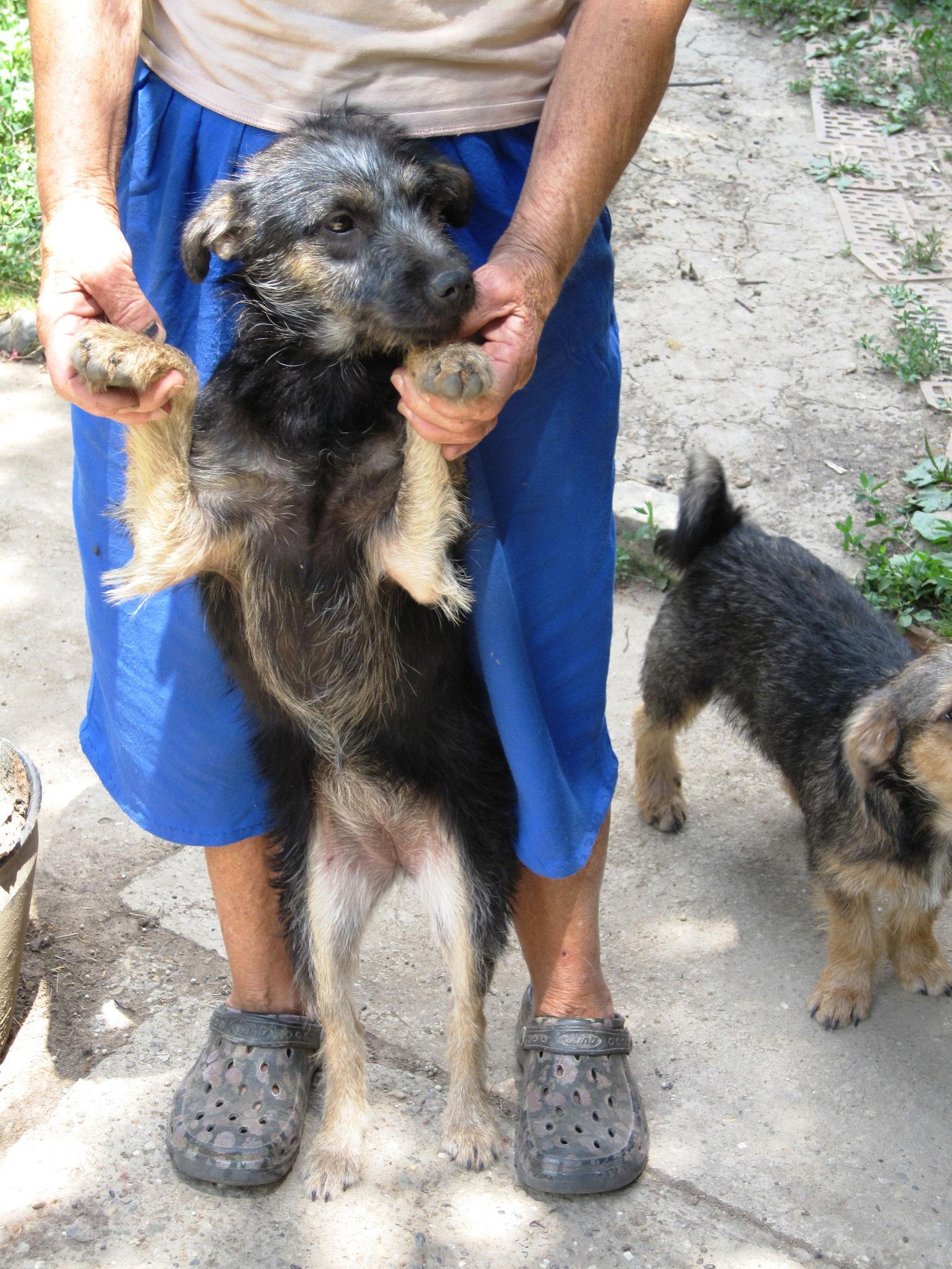 Hundekind Lara, völlig verloren in Serbien...