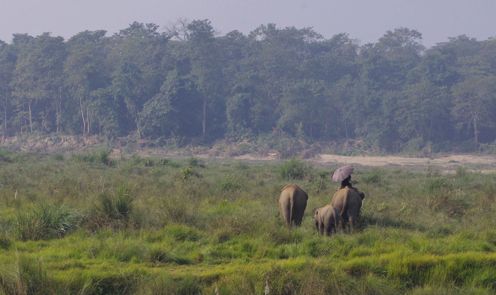 Oh... Elefanten gibt´s ja auch noch