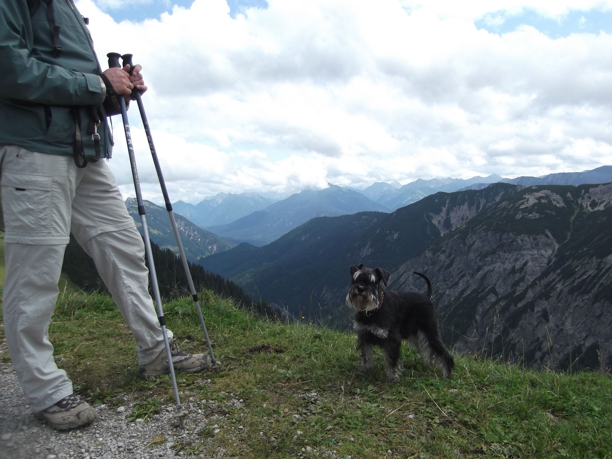 Bergschnauzer Pia