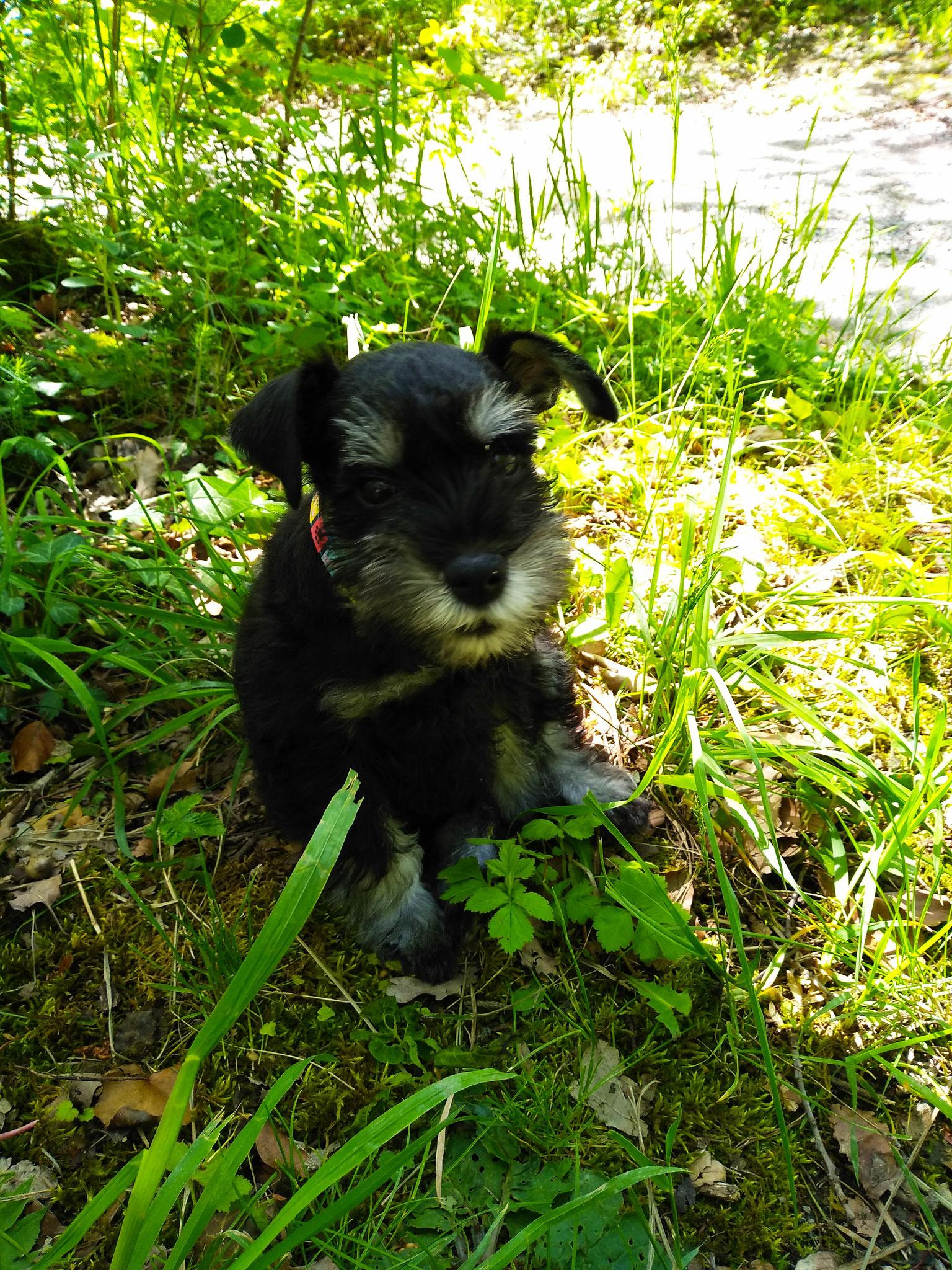Fricka lernt den Wald kennen (sie heißt jetzt Yuki)