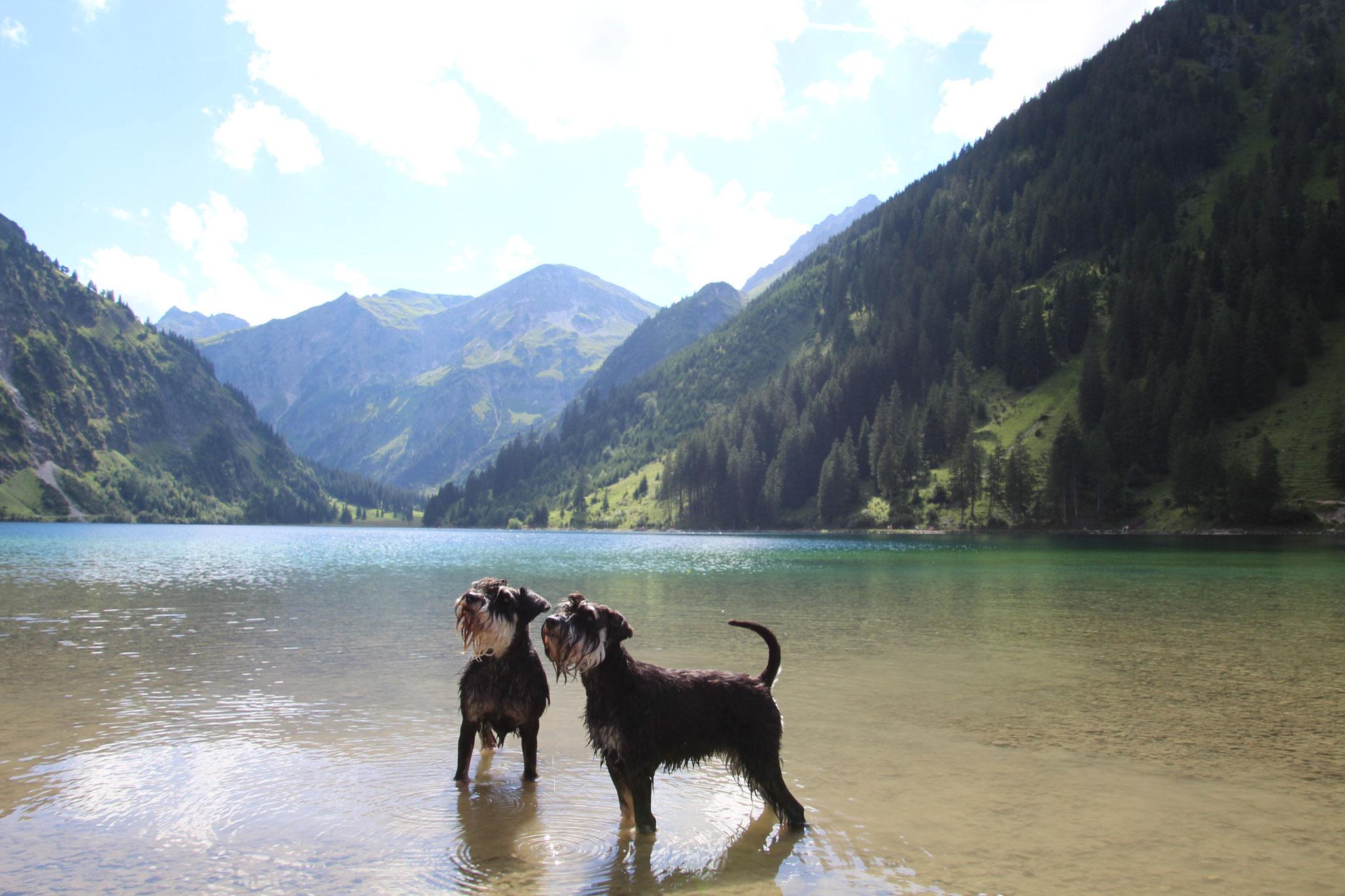 Brünni und Pia im Vilsalpsee, Tannheimer Tal