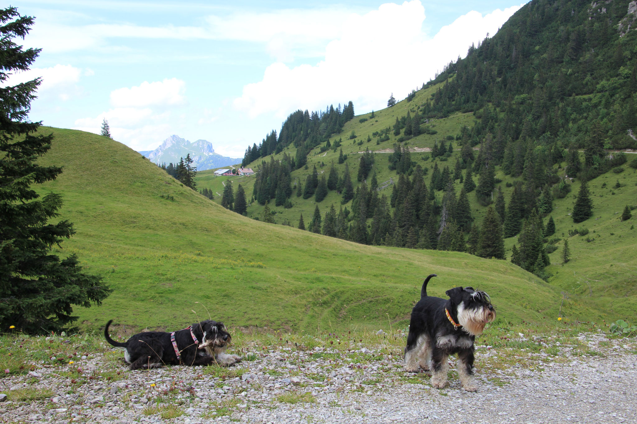 Brünni und Pia beim Bergwandern im Tannheimer Tal/Edenalpe