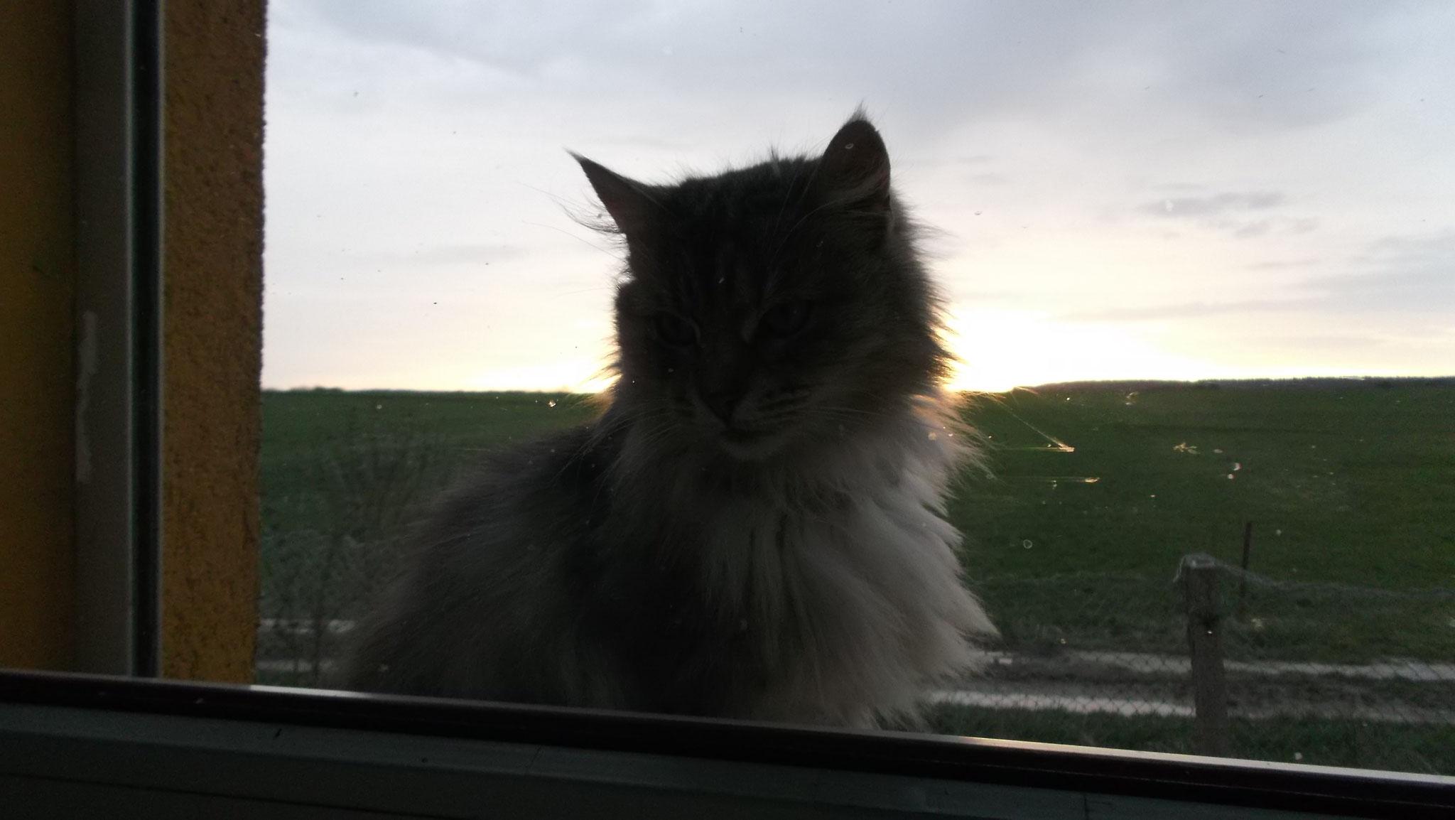 Sie hat mir geholfen - ganz im Stillen- meinen Auftrag hier auf dieser Erde als Katze zu erfüllen