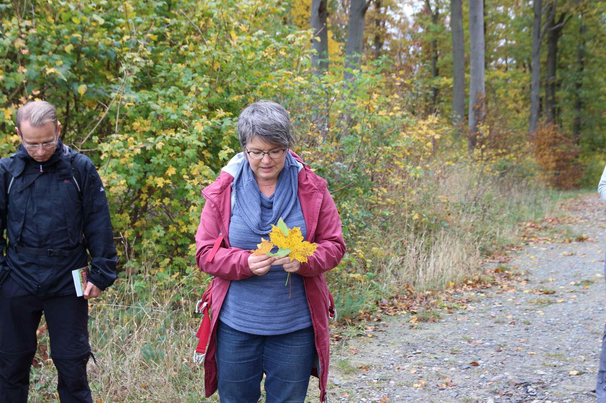 Frau Lugert zeigt die Unterschiede zwischen Spitzahorn, Bergahorn und Feldahorn