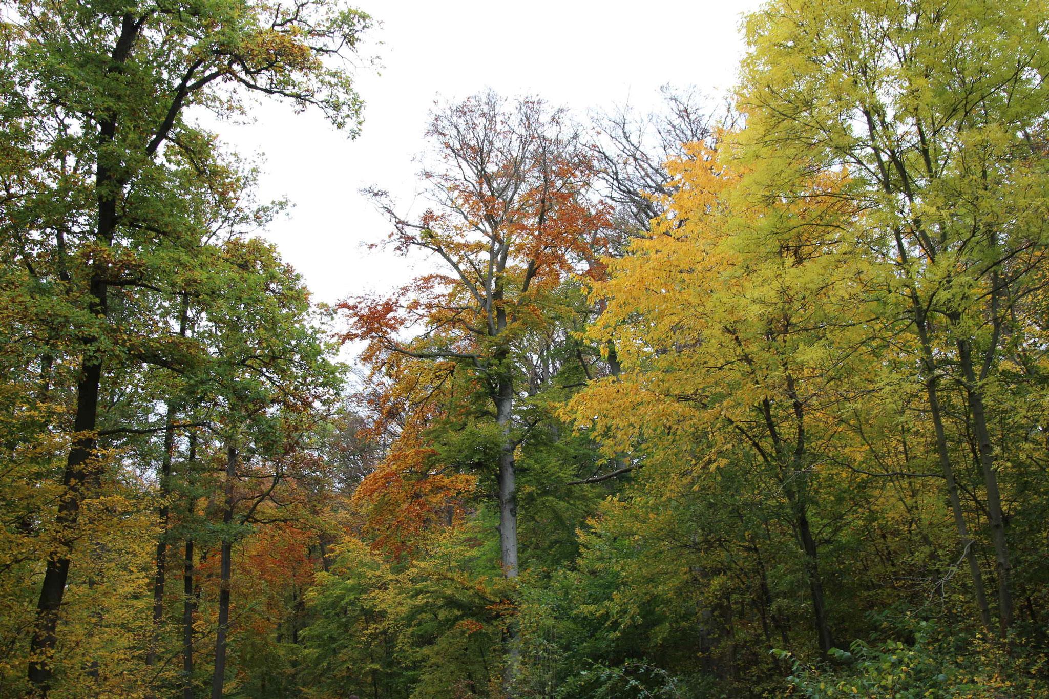 Bäume im herbstlichen Laub