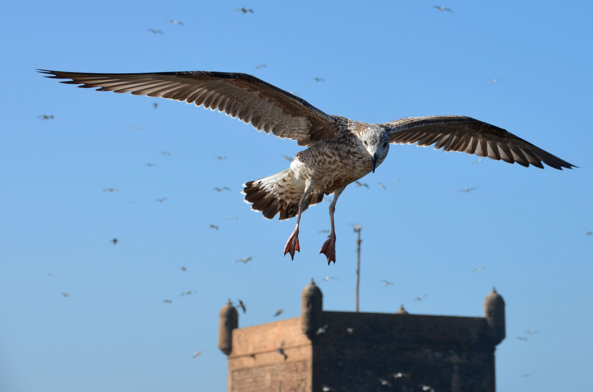 une des moiestes d'Essaouira
