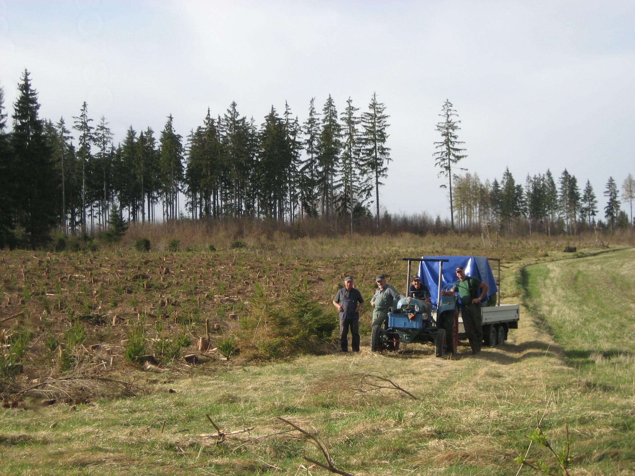 Neuanpflanzung im Frankenwald